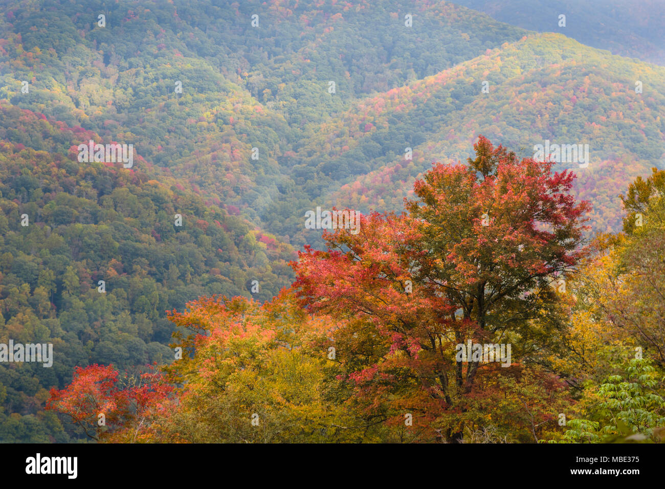 North Carolina, United States of America.  Fall scenery in the Great Smoky Mountains National Park.  UNESCO World Heritage Site. - Stock Image