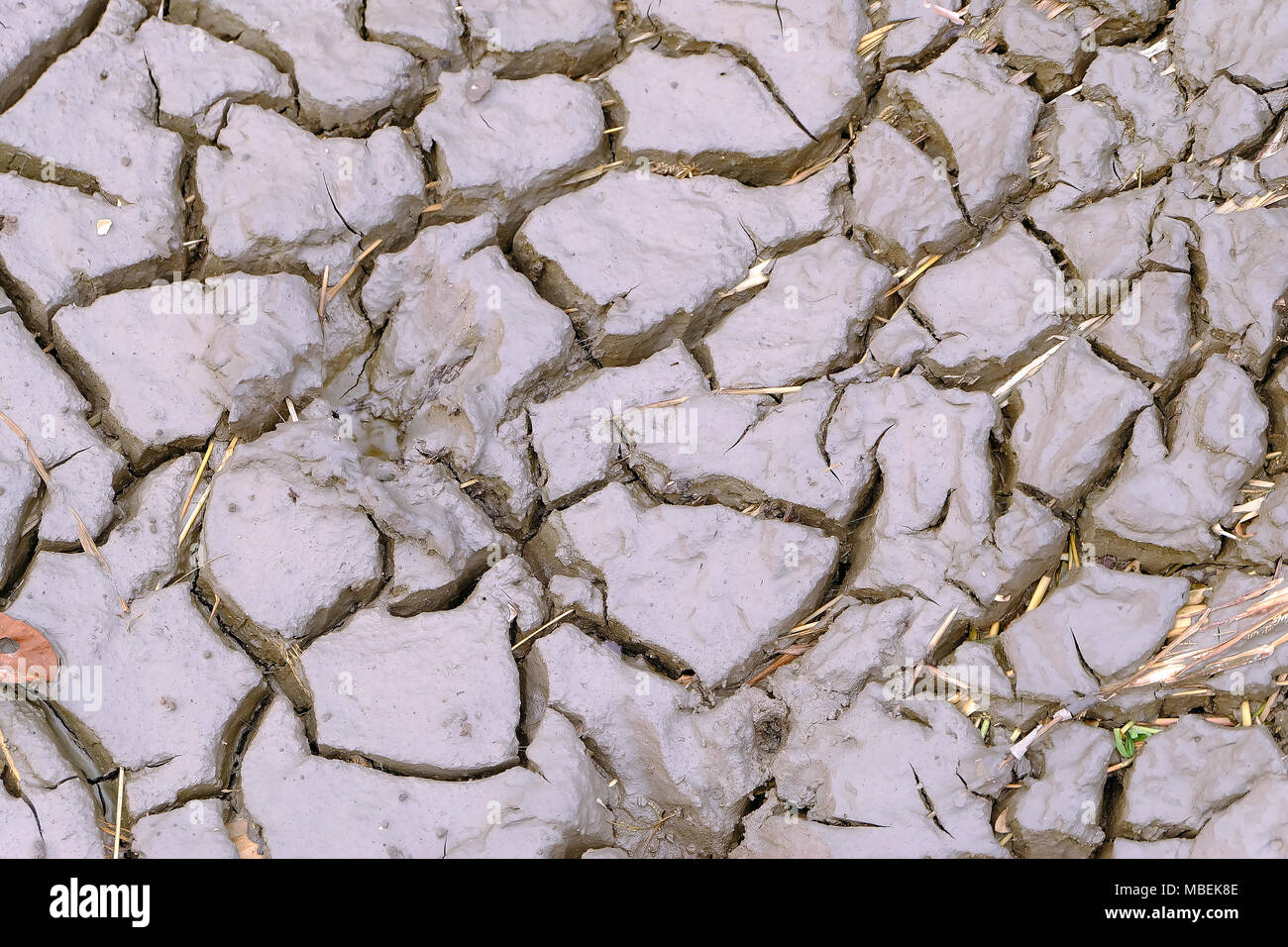 Abstract crack surface of mud, Ground in drought, Soil texture and dry mud, drought environmental issues - Stock Image