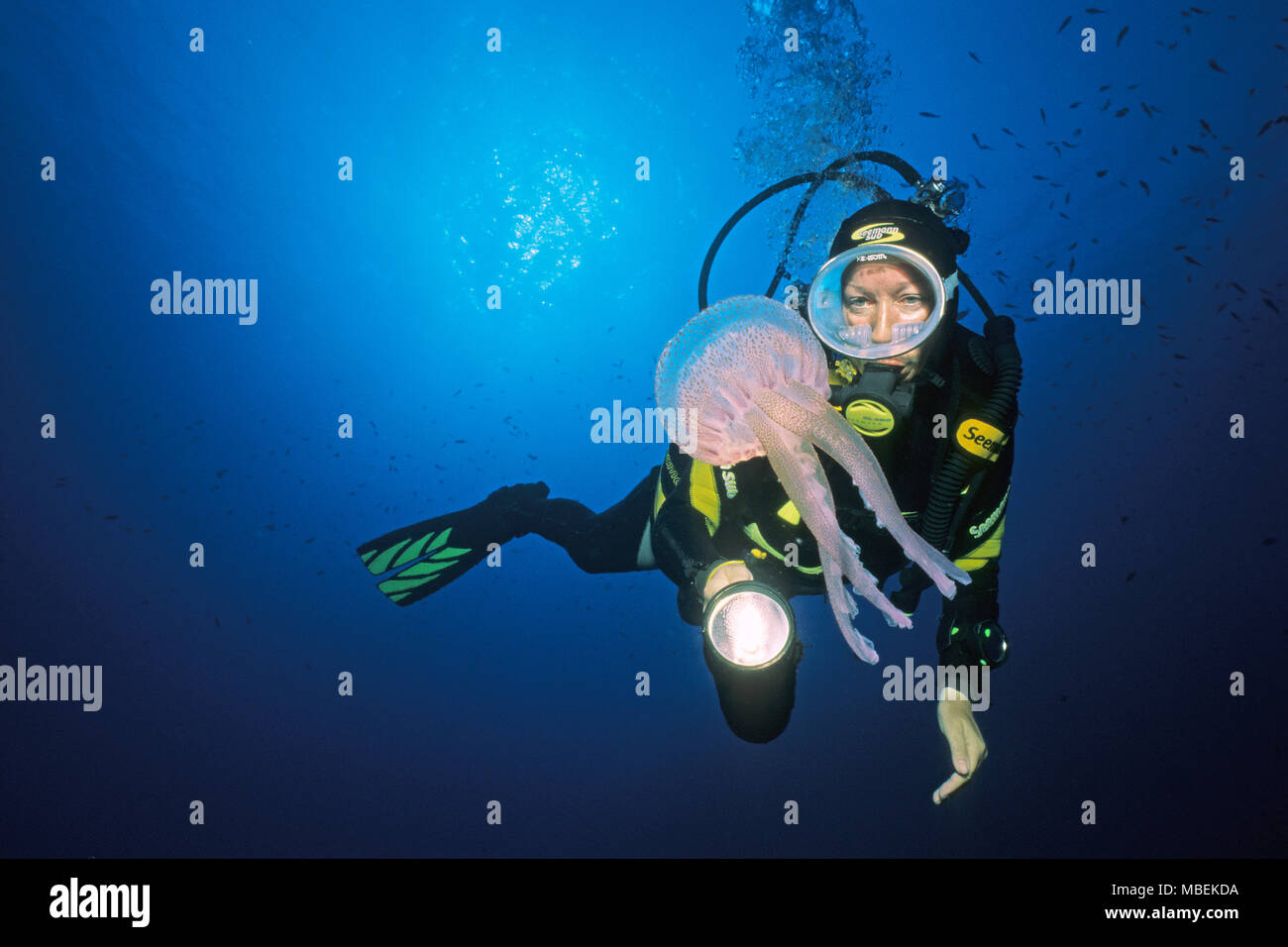 Scuba diver and fire jellyfish, mauve stinger, warty jelly (Pelagia noctiluca), dangerous, Corsica island, France - Stock Image
