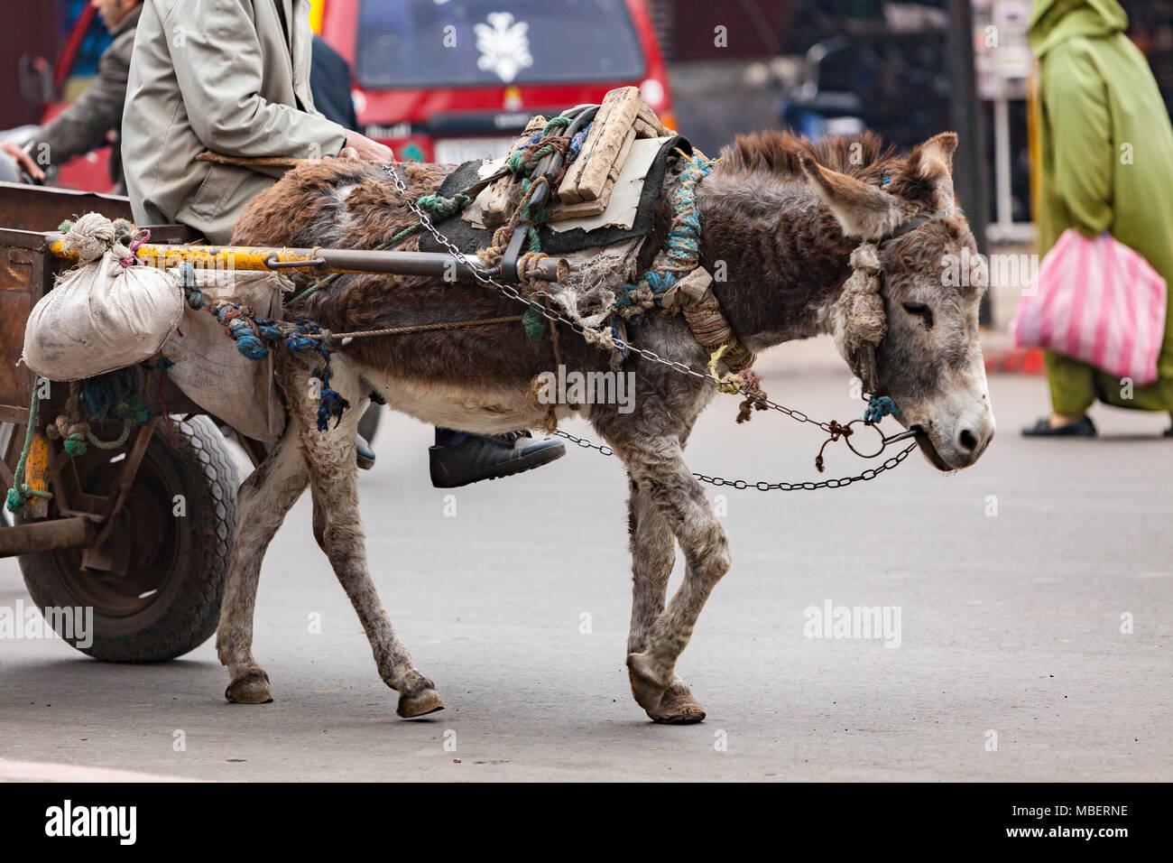 Donkey pulling goods in the Streets Markets in Marrakech Stock Photo