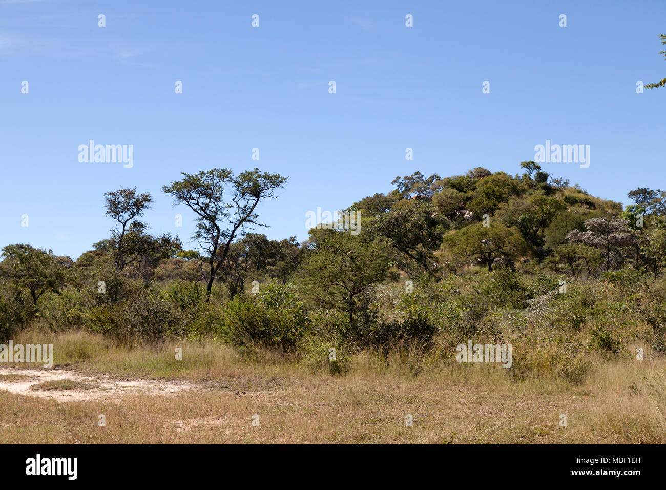 The bush at Matobo National Park in Zimbabwe. The national park is in the bushveld and provides habitat for creatures including white rhinos and zebra - Stock Image