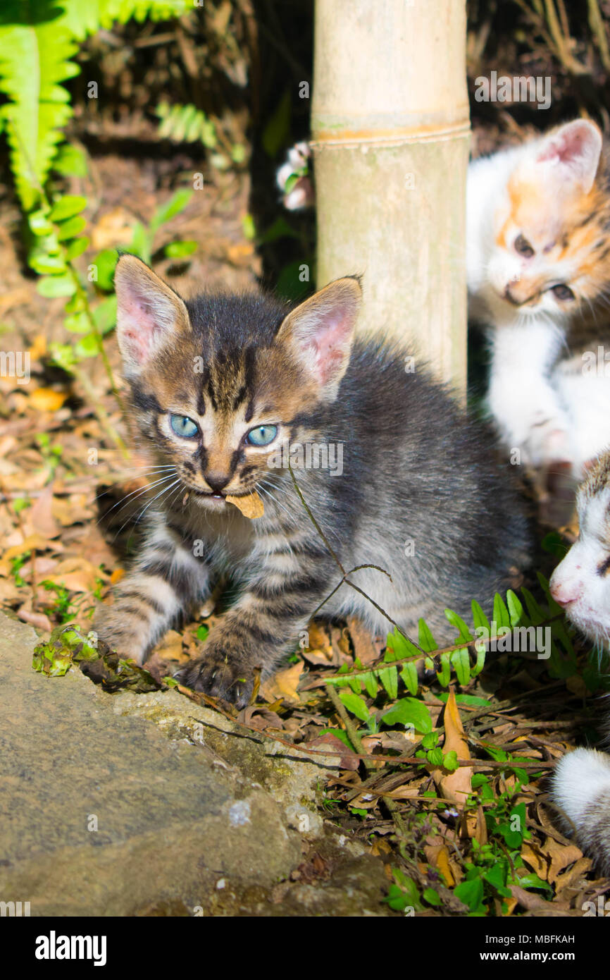 Cute kittens playing in bushes - Stock Image