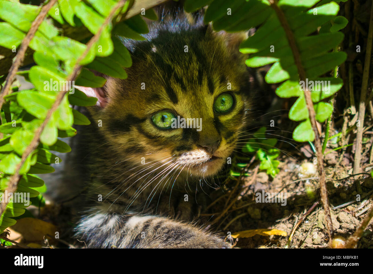 Cute kittens hiding - Stock Image