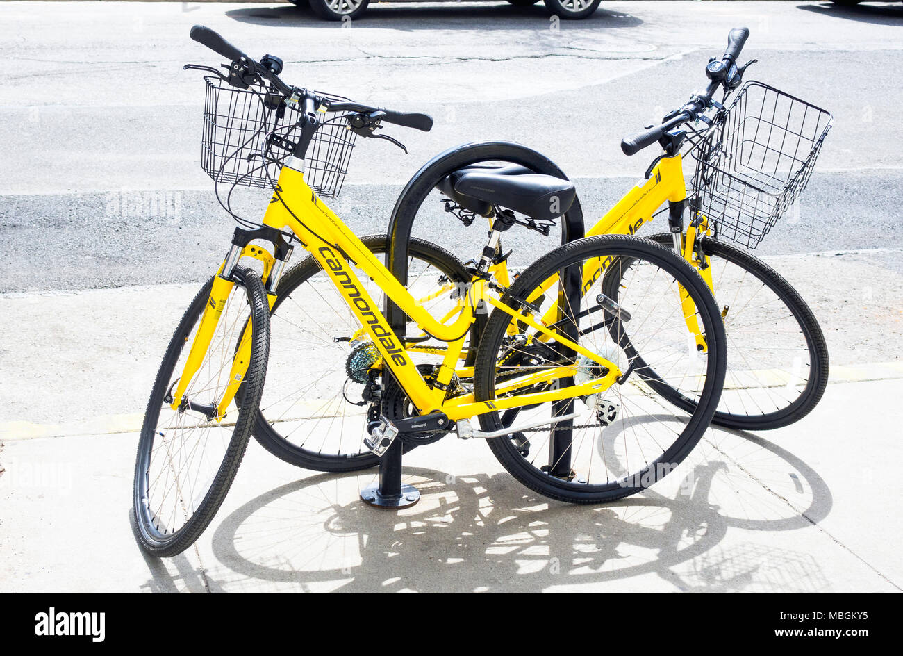 Two yellow Cannondale Road Bikes for female riders secured to a bike post - Stock Image