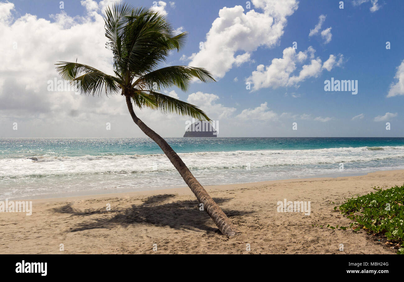 The Caribbean beach , Martinique island. - Stock Image