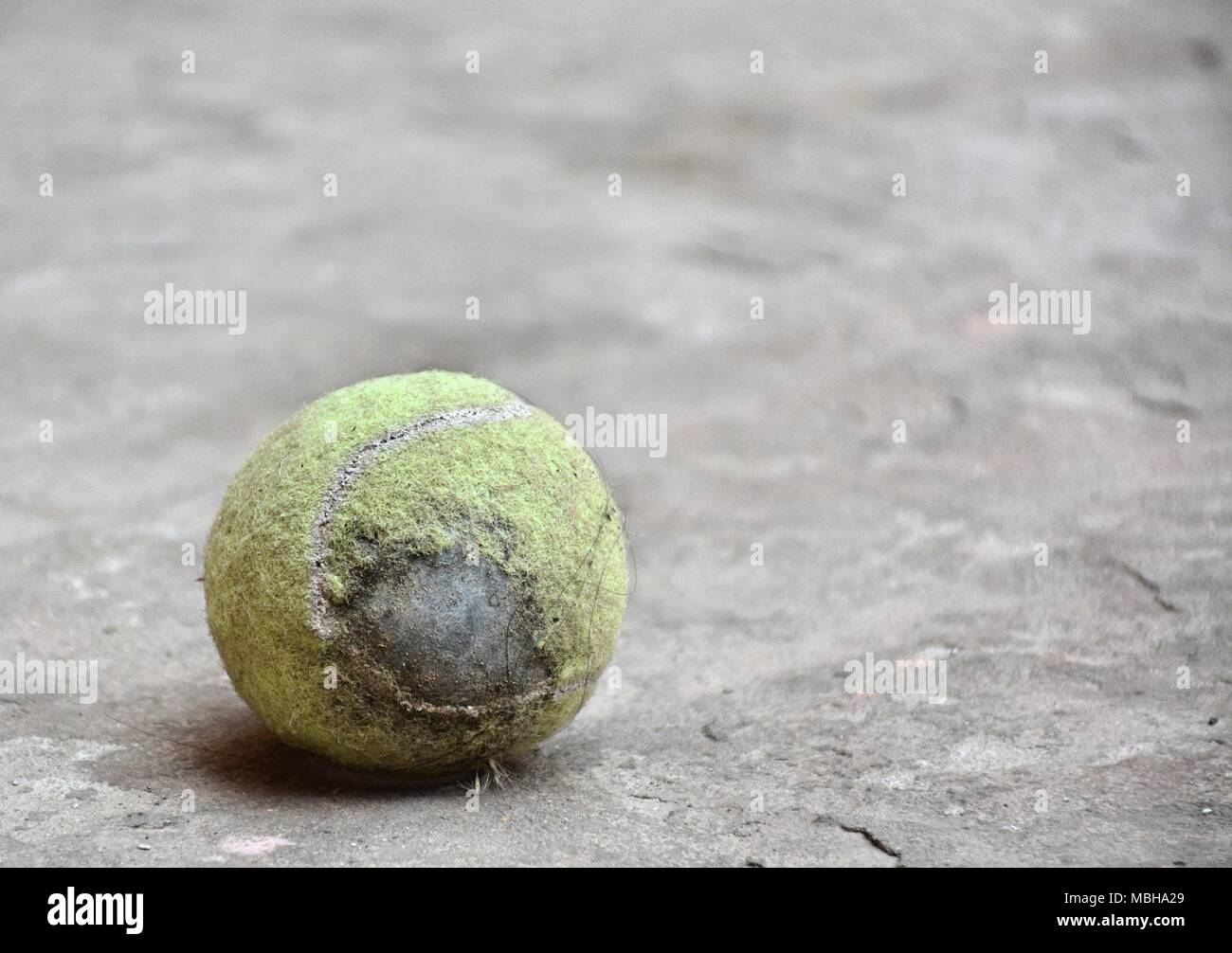Worn Out Tennis Ball On Concrete Floor With Some Hair And Feather on it - Stock Image