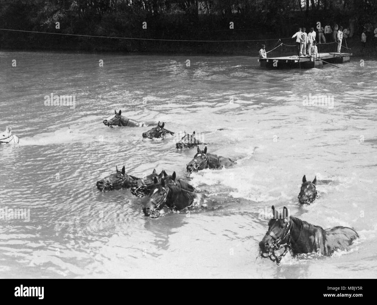 Swimming French Cavalry - Stock Image