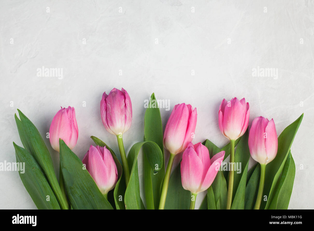 Spring flowers pink tulip on white background flat lay top view spring flowers pink tulip on white background flat lay top view with copy space mightylinksfo
