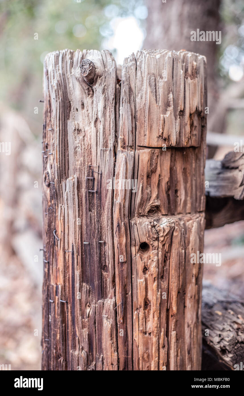 Post beam with staples from years of signage - Stock Image