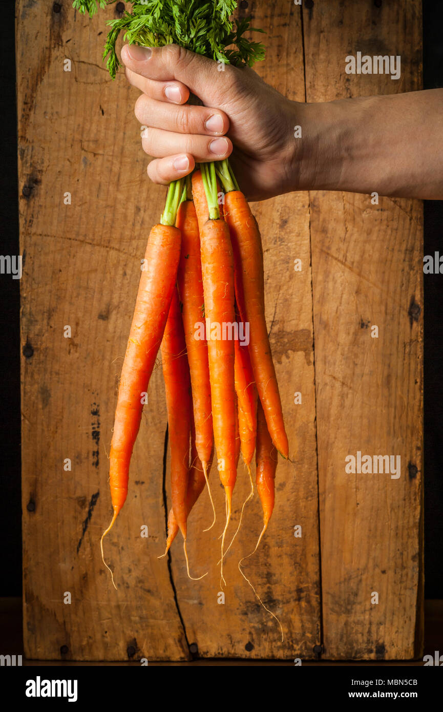 Studio still lifes of a hand holding a bunch of fresh carrots in front of a wood background. - Stock Image