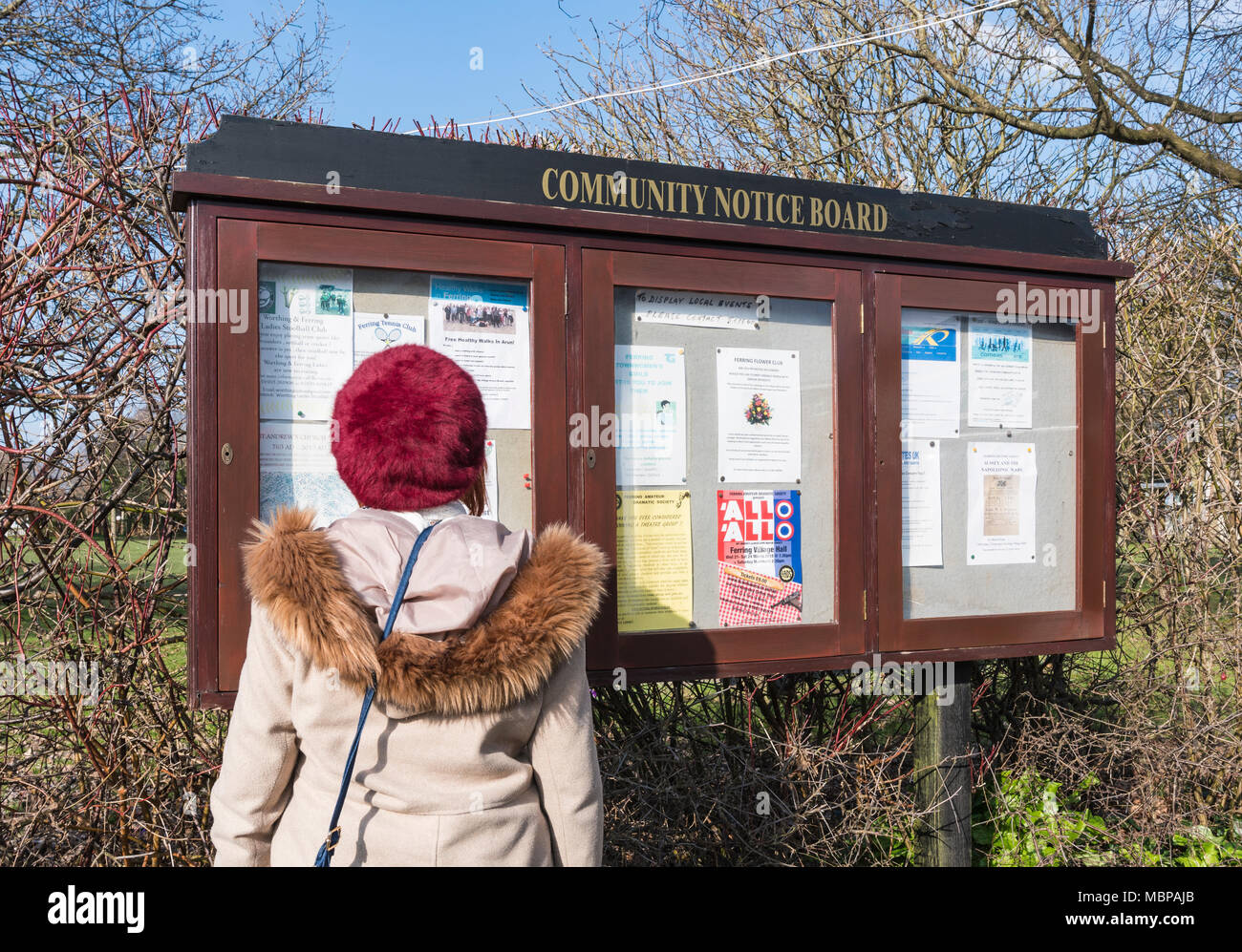 Woman reading a Community Notice Board in Ferring, West Sussex, England, UK. Lady looking at a Community Noticeboard in a British town. - Stock Image