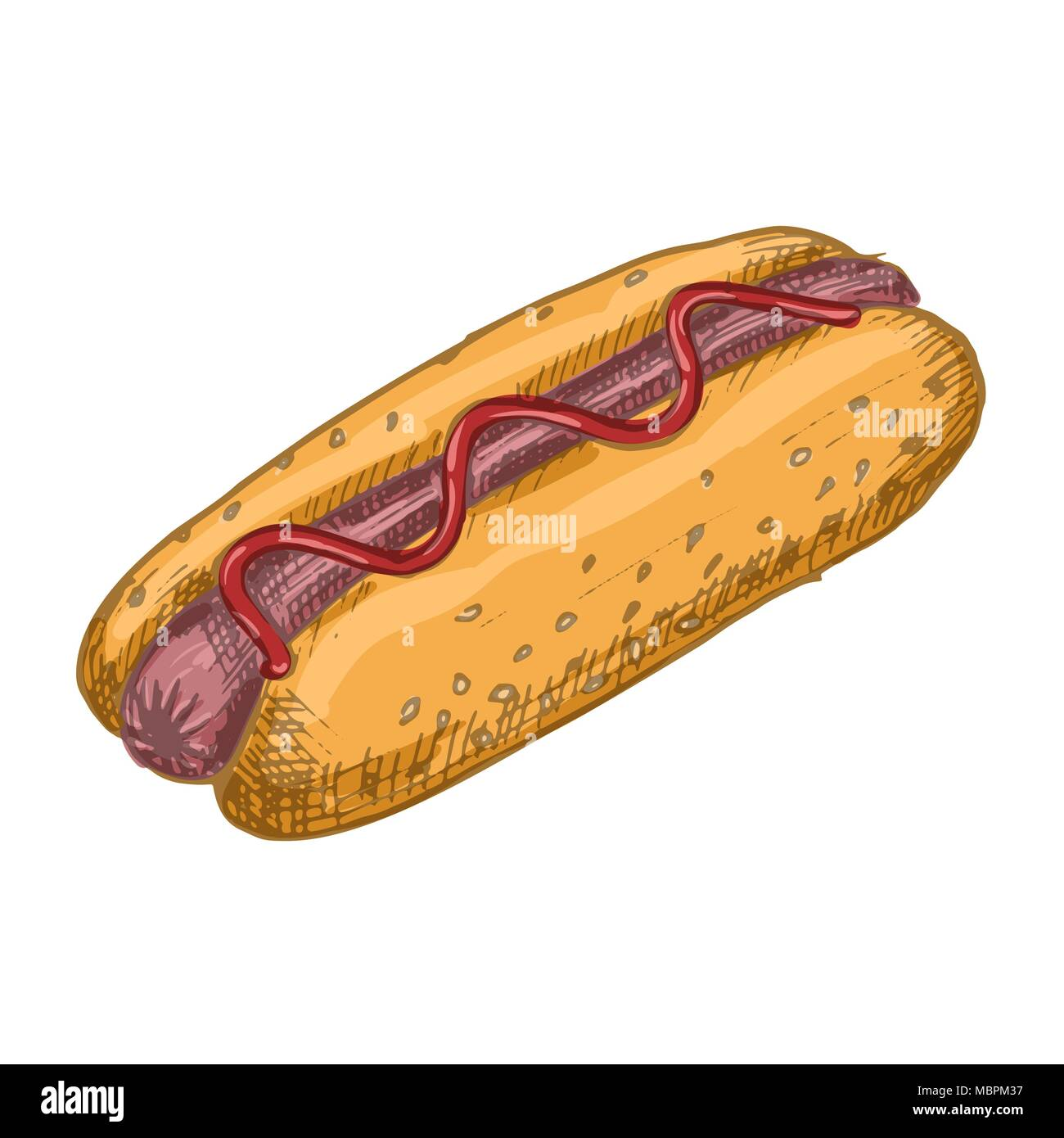 Vector Vintage Hot Dog Drawing Hand Drawn Color Fast Food