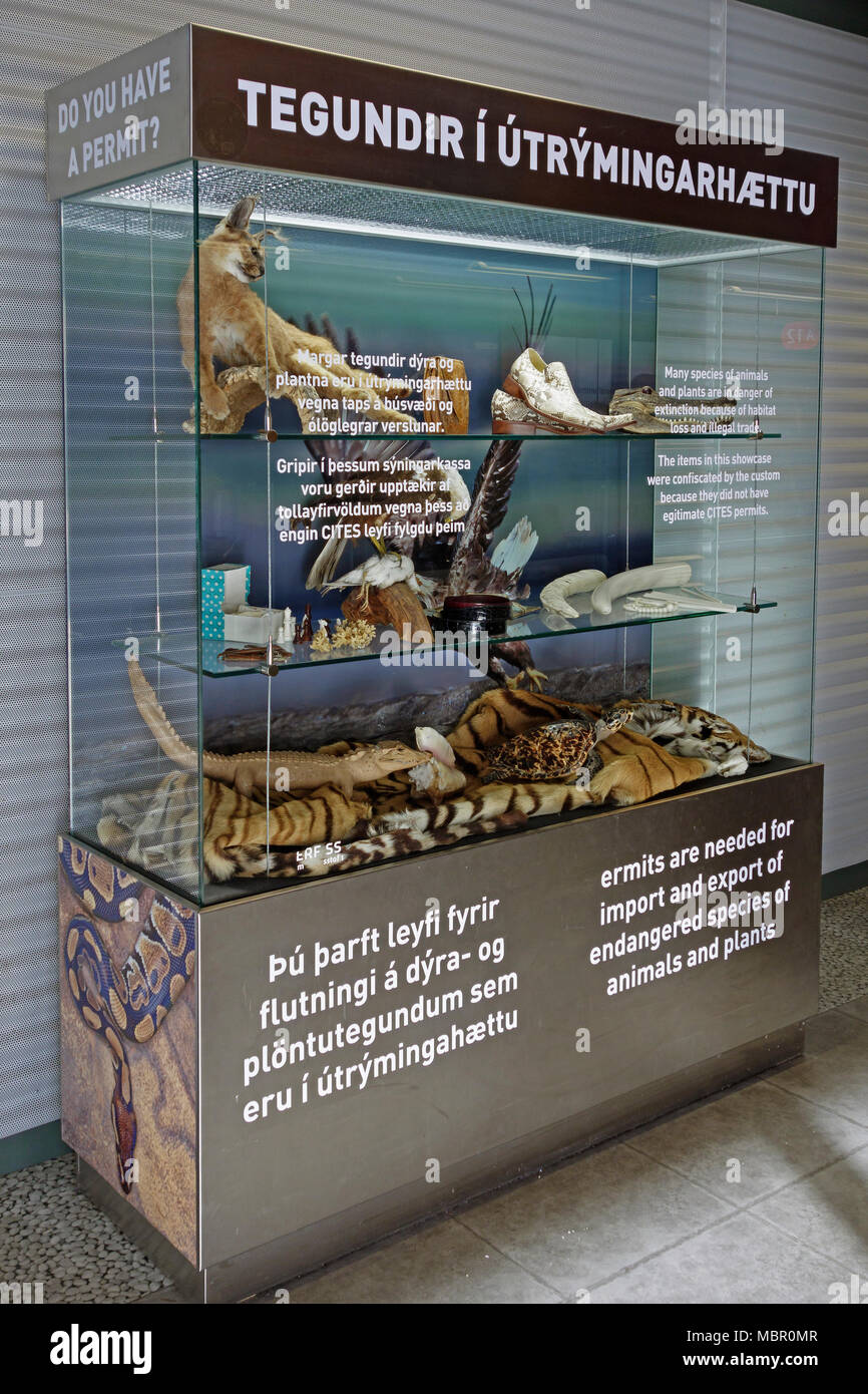 Keflavik Airport, Reykjavik, Iceland. Display cabinet with banned items confiscated under the CITES agreement, which protects endangered species - Stock Image