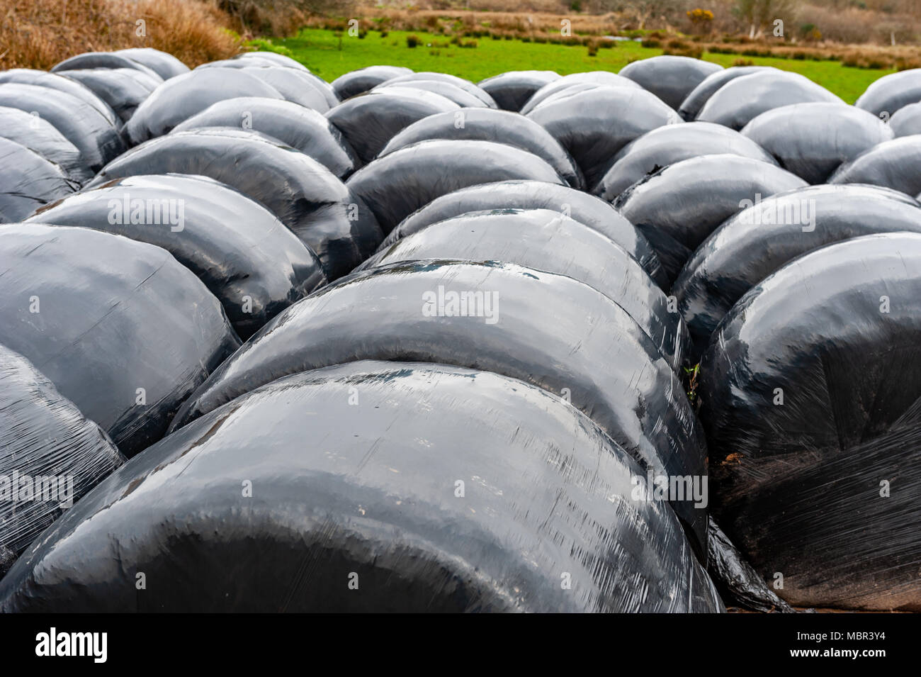 Bails of animal feed in a field during the fodder crisis in County Cork, Ireland. - Stock Image