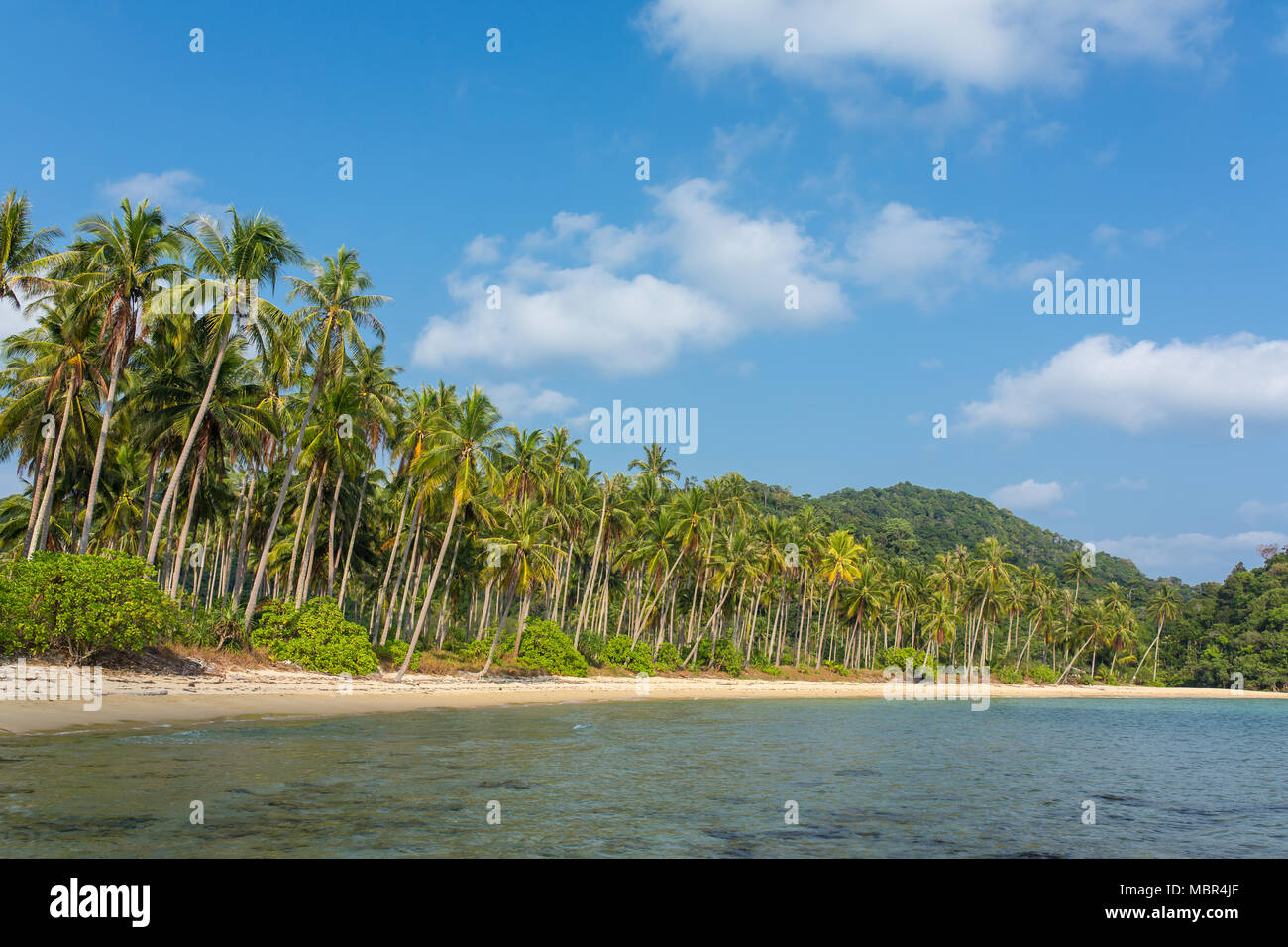 Palm trees on beautiful tropical beach on Koh Chang island in Thailand Stock Photo