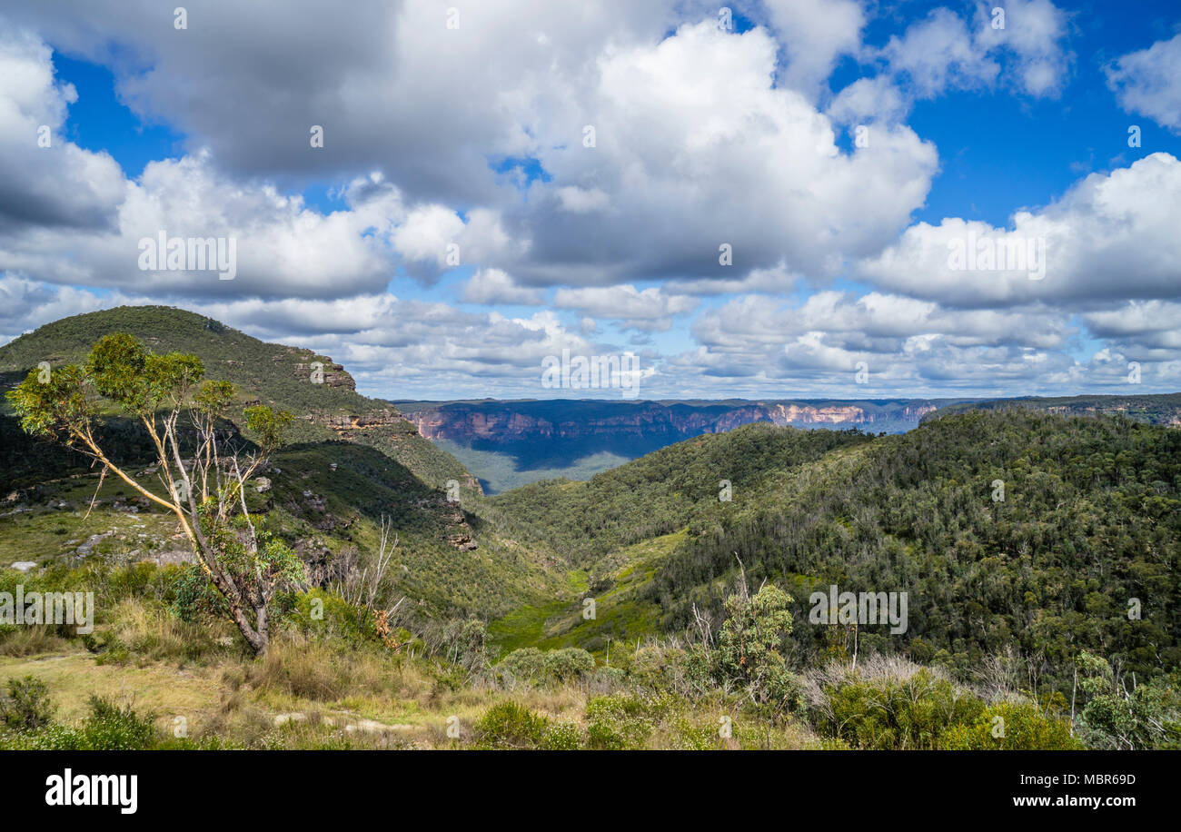view of the basalt cap of 1049 m Mount Banks in the Explorer Range of the Blue Mountains against the backdrop of the escarpment of Grose Valley, Blue  - Stock Image