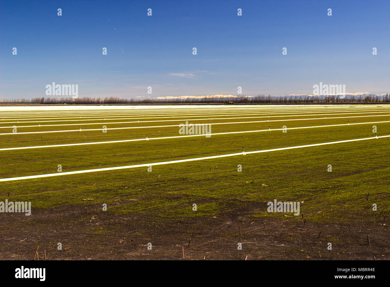 Rows Of Irrigation Pipes & Sprinklers On Farm Field - Stock Image