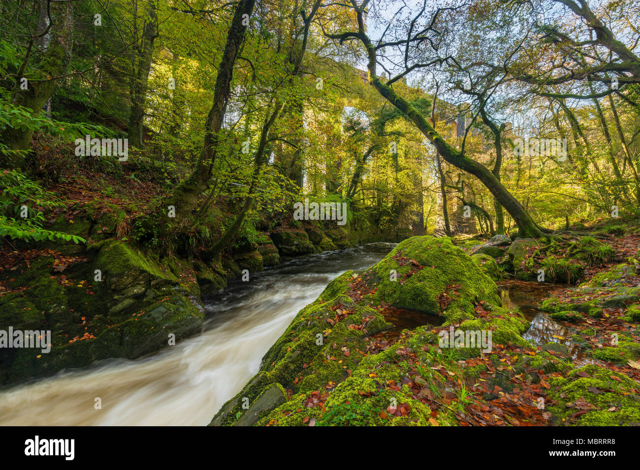 The River Erme in woodland on the edge of the Dartmoor National Park with the Ivybridge viaduct beyond. Devon, England. - Stock Image