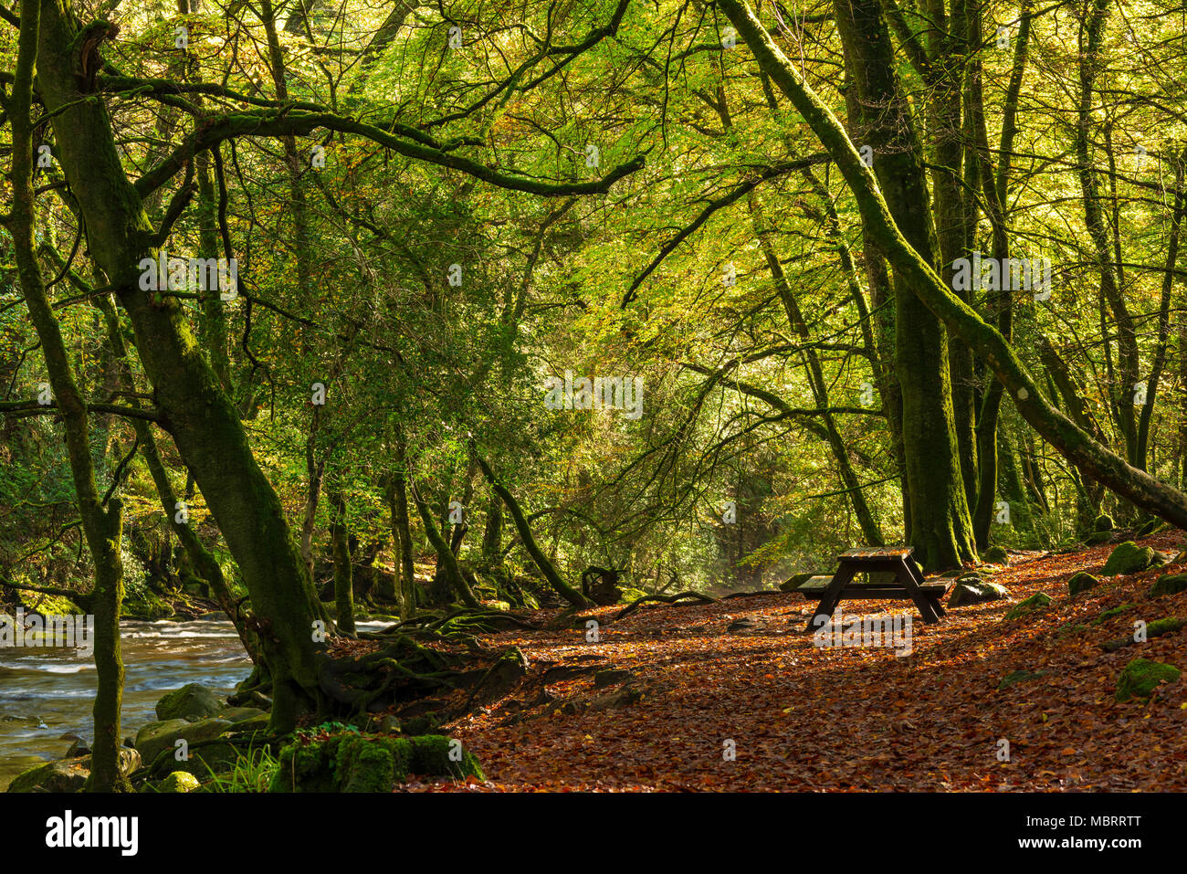 A picnic table on the bank of the River Erme in autumn woodland on the edge of the Dartmoor National Park, Devon, England. - Stock Image