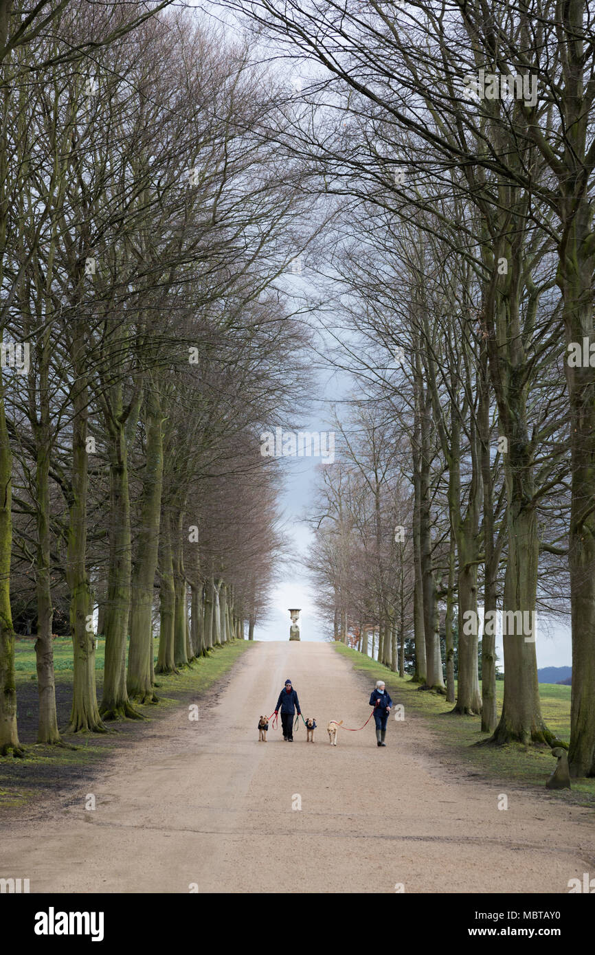 Dog walkers on path between bare trees in grounds of Chatsworth House, Derbyshire, England, United Kingdom, Europe - Stock Image