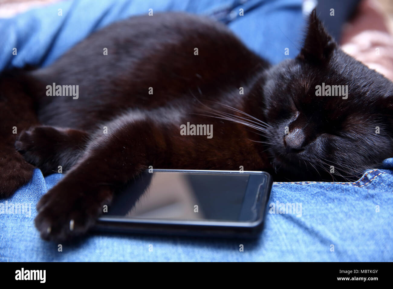 Cat who can not sleep without a smartphone. - Stock Image