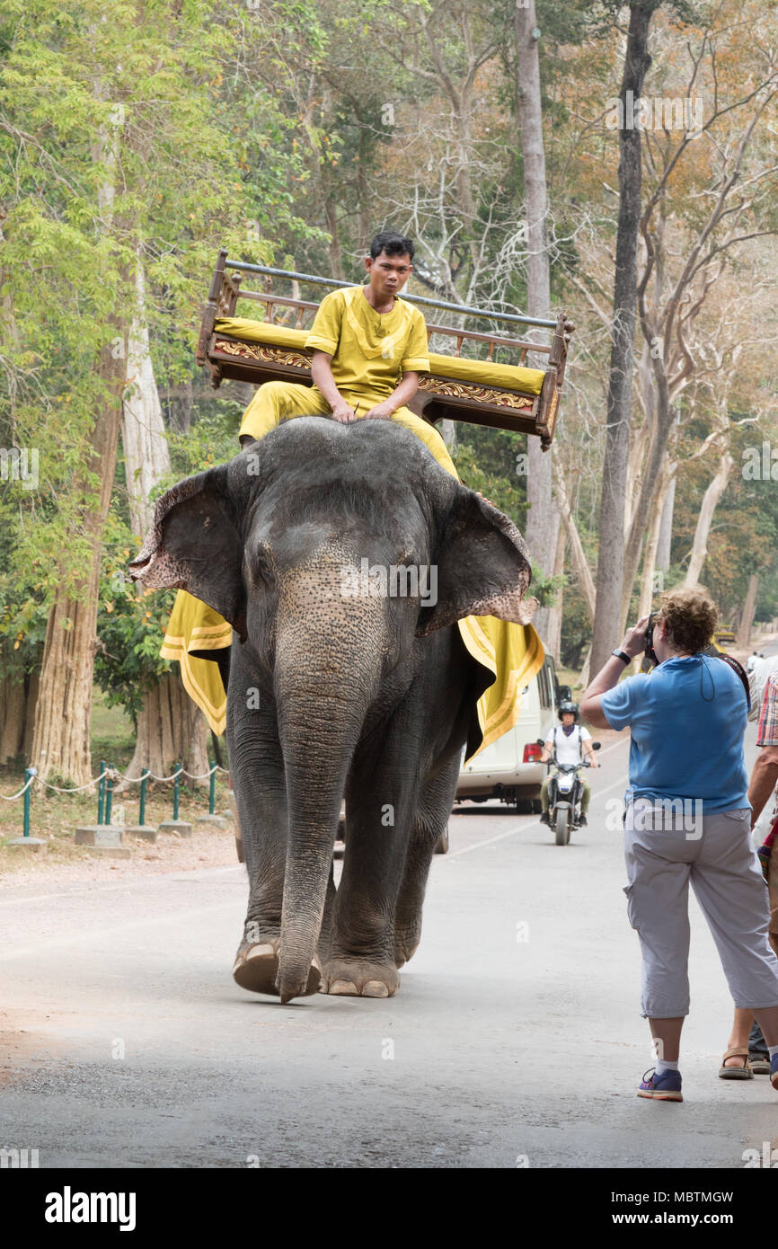 Tourists photographing mahout riding working asian elephant on the road, Angkor Thom, Cambodia, Asia - Stock Image