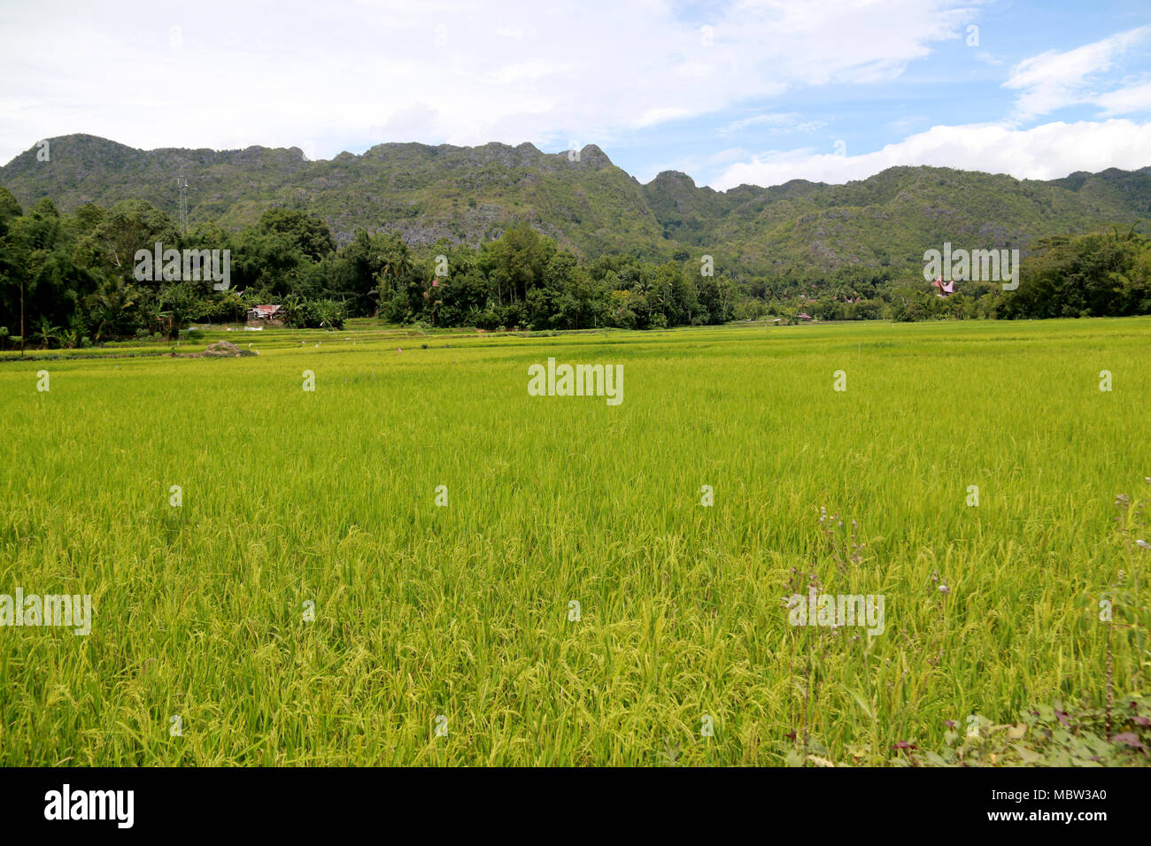 Countryside on Sulawesi: Mountain Ranges and Rice Fields in Toraja, Sulawesi, Indonesia - Stock Image