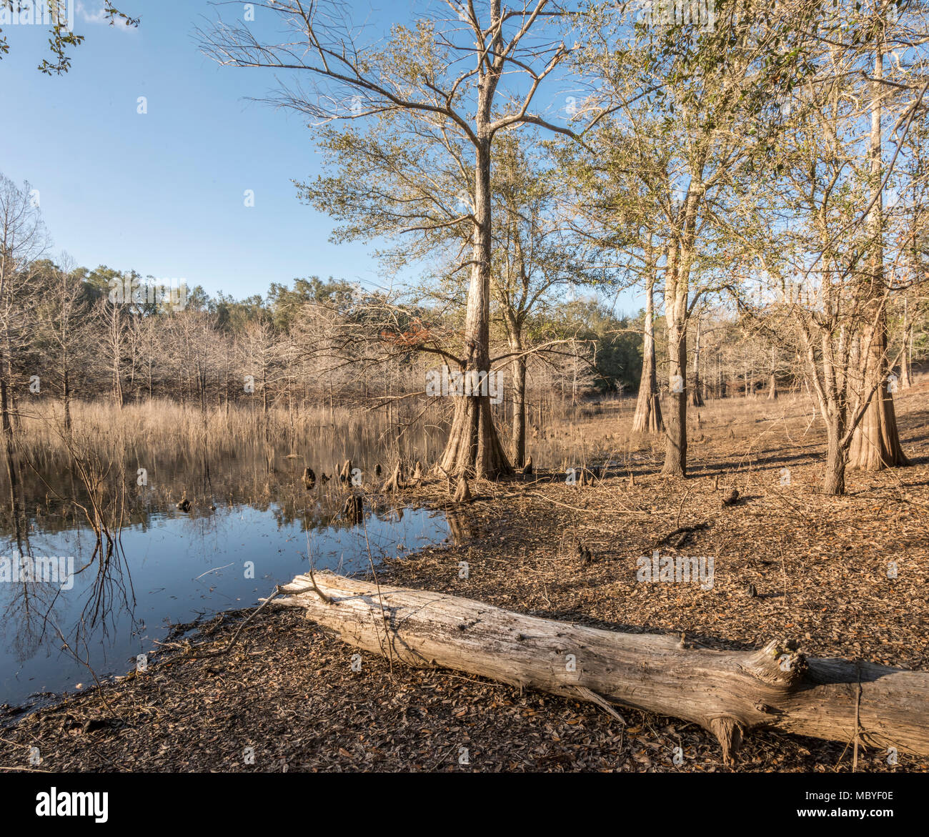 Indian Lake, Silver River Springs Forest Stock Photo