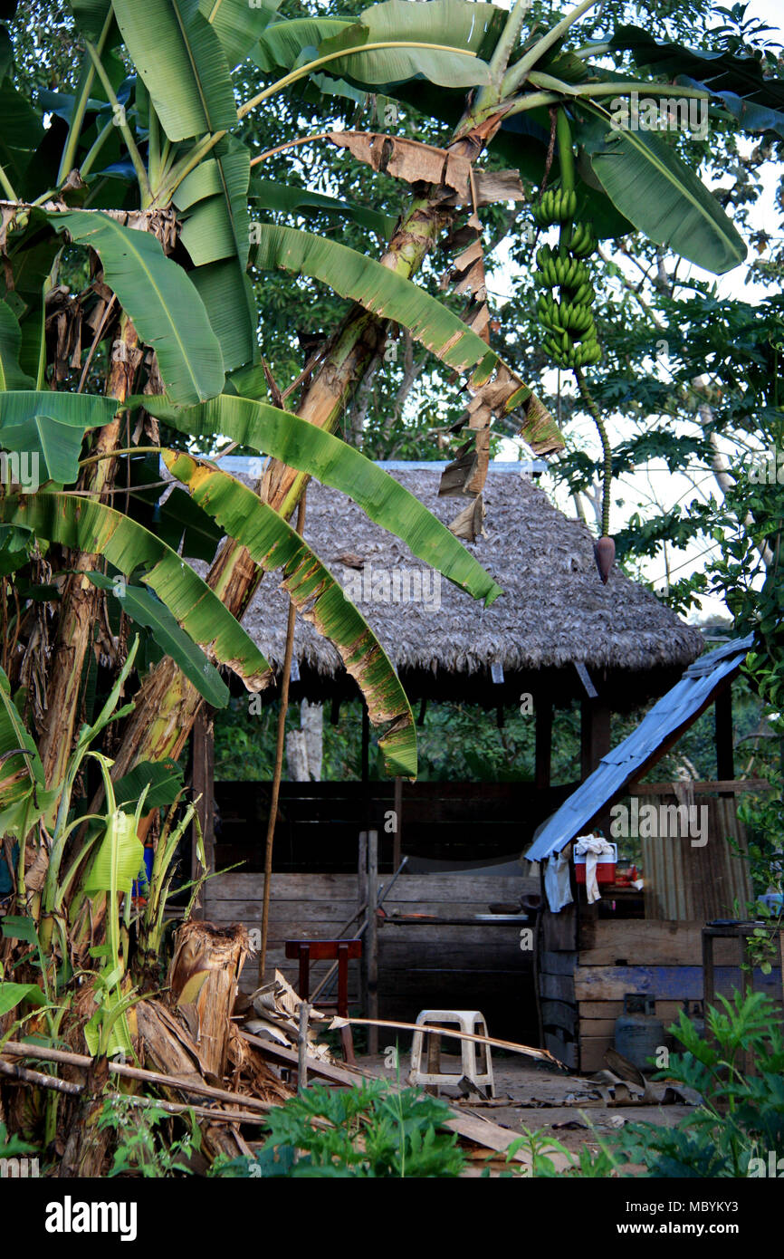 A very simple Farm House in the Middle of the Amazon Rainforest, Tambopata National Reserven the Amazon Basin, Peru - Stock Image