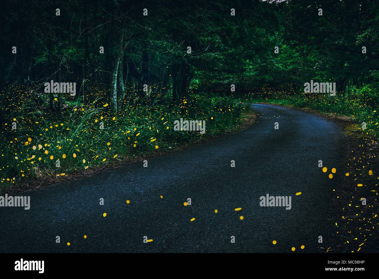 Fireflies flying in the forest at twilight. - Stock Image