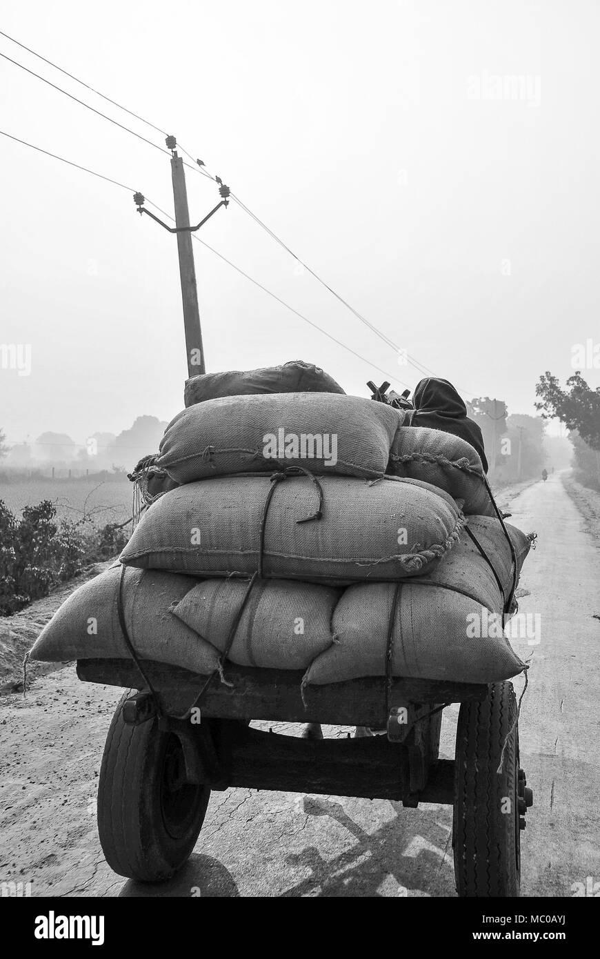 Black and white image of man driving old cart with rice sacks piled high, on a dusty road - Rajasthan, India - Stock Image
