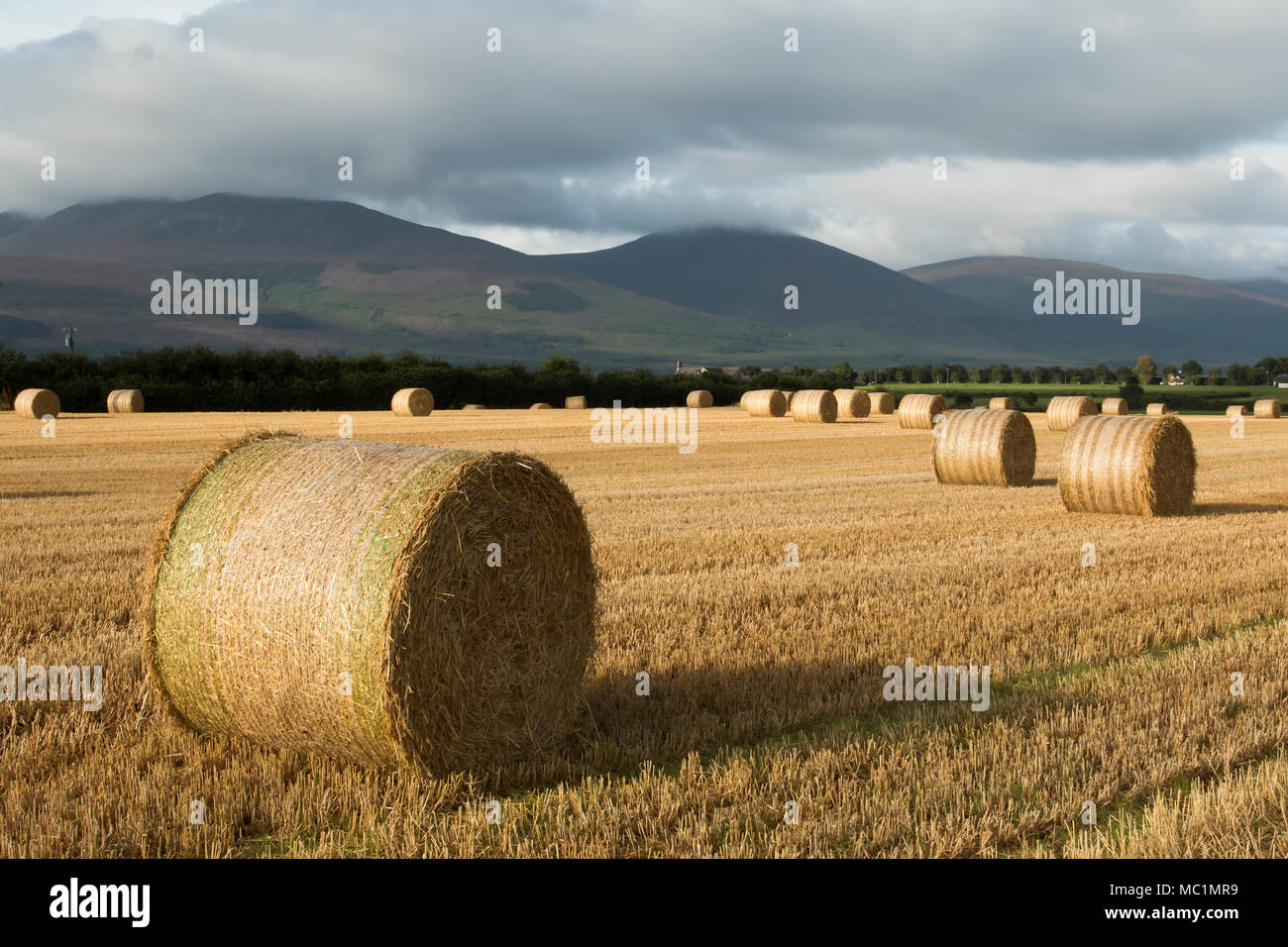 Round straw bales in corn field overlooking the Knockmealdown mountains. Ardfinnan, Tipperary, Ireland - Stock Image