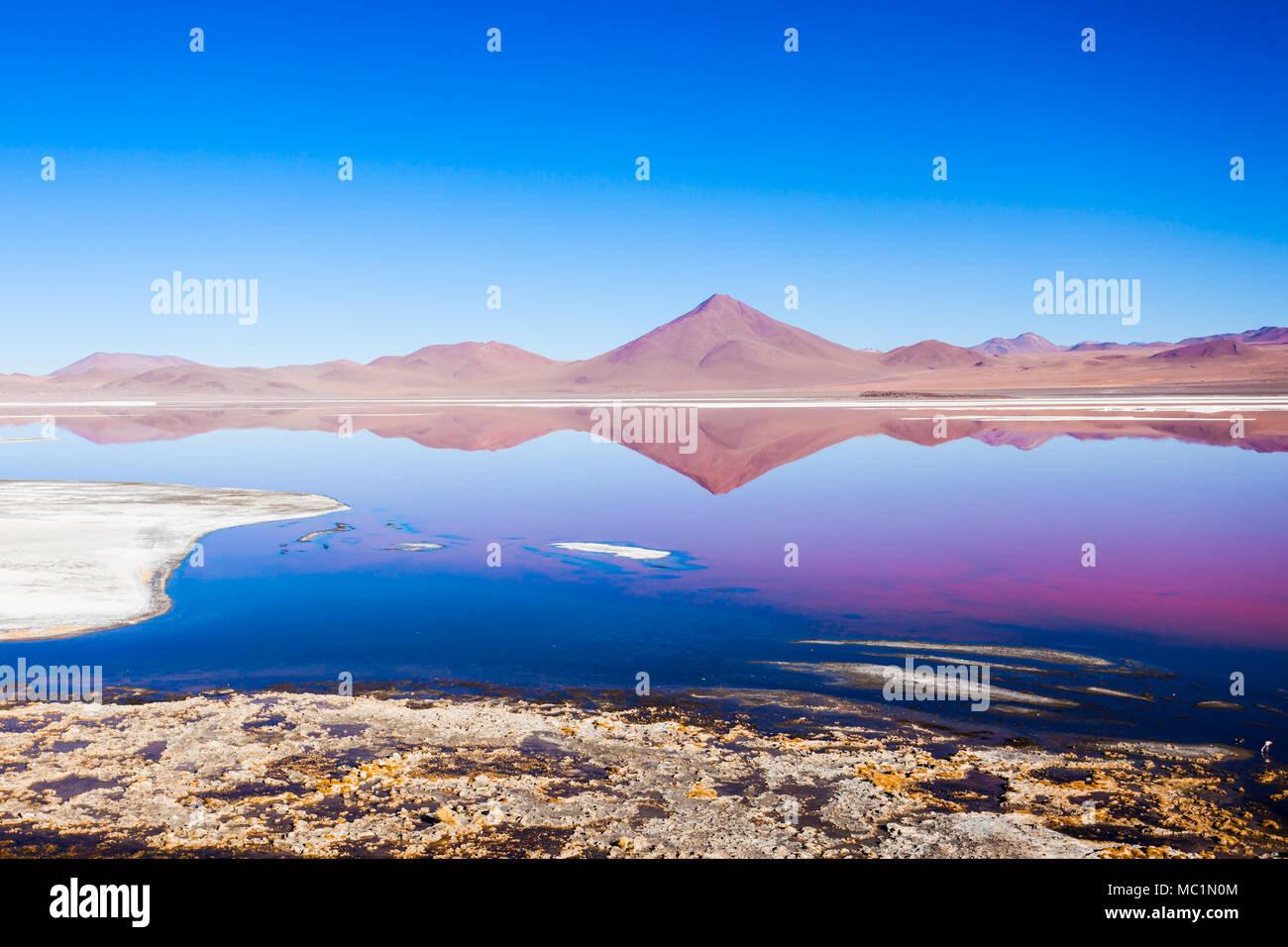 Laguna Colorada, means Red Lake is a shallow salt lake in the southwest of the Altiplano of Bolivia - Stock Image