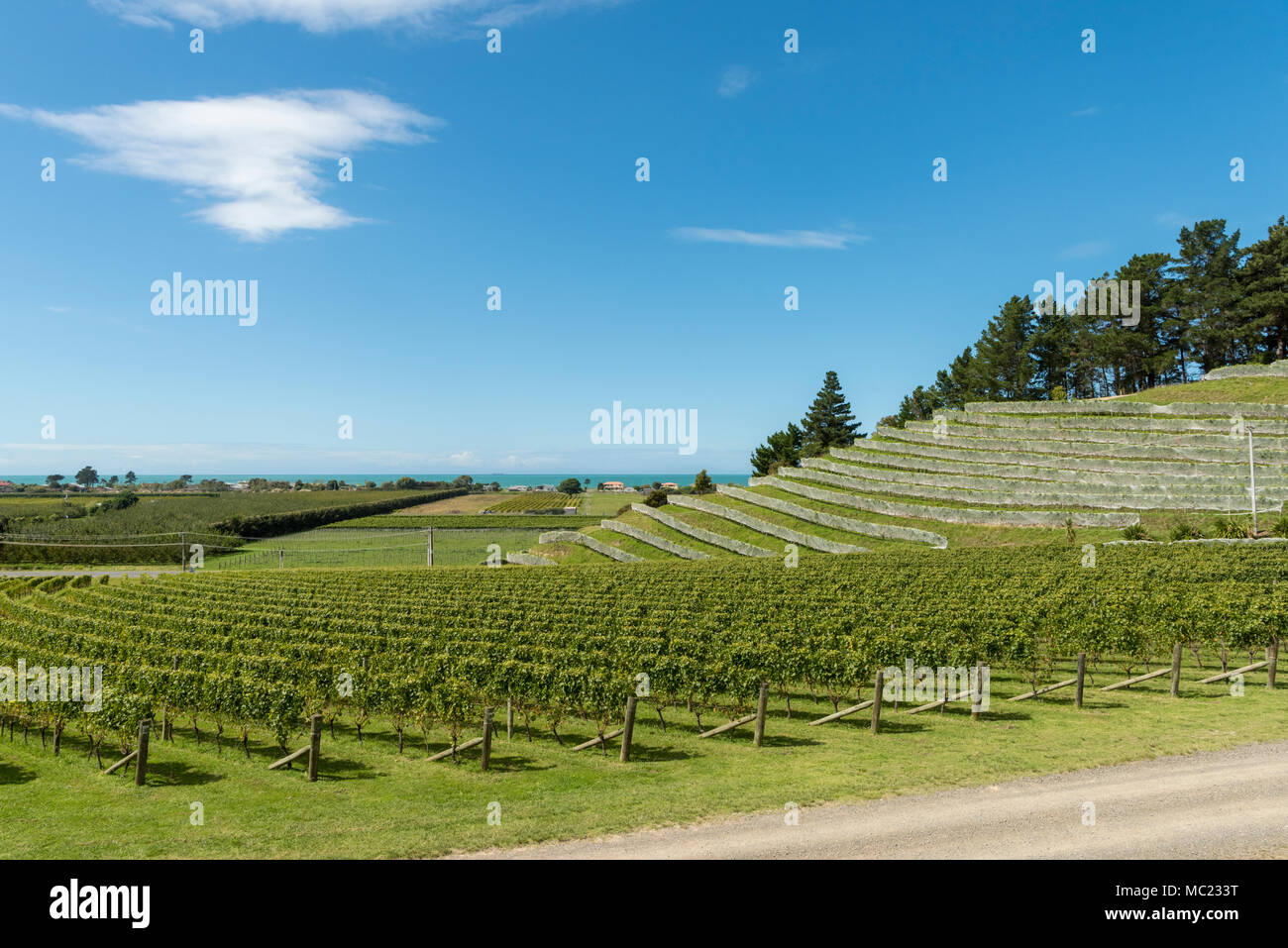 Terraced vineyards at the Esk Valley vineyard, Hawkes Bay, New Zealand, new world wine production Stock Photo