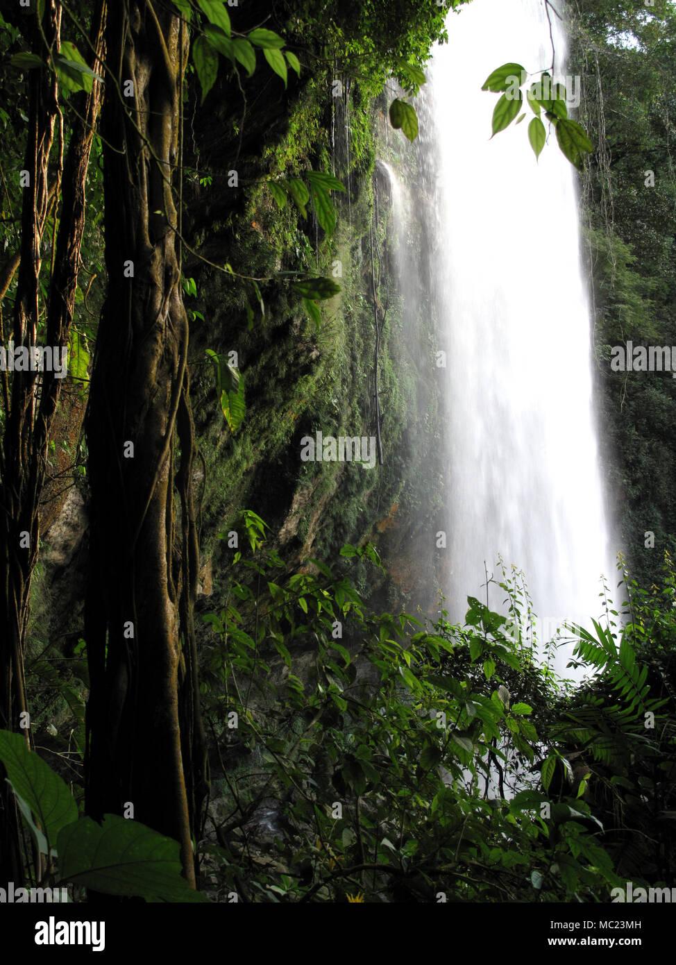 Lianas grow at the Misol Ha waterfall in Salto de Agua, Chiapas, Mexico, February 19, 2010. - Stock Image