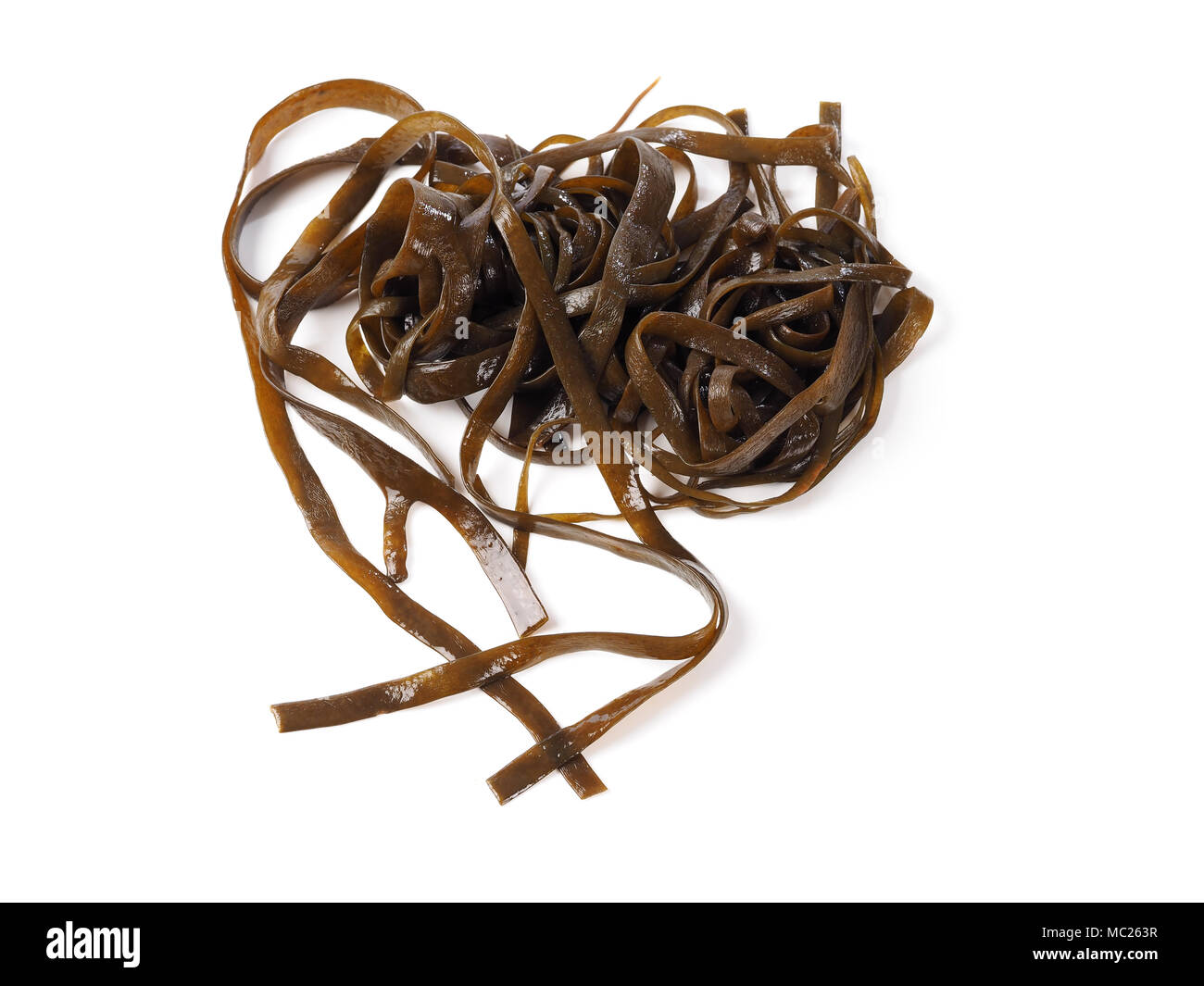 Thongweed – Sea thong – Sea spaghetti – Espagheti de mar  Sea spaghetti is a brown algae. Binomial name: Himanthalia elongata. It is an edible seaweed - Stock Image