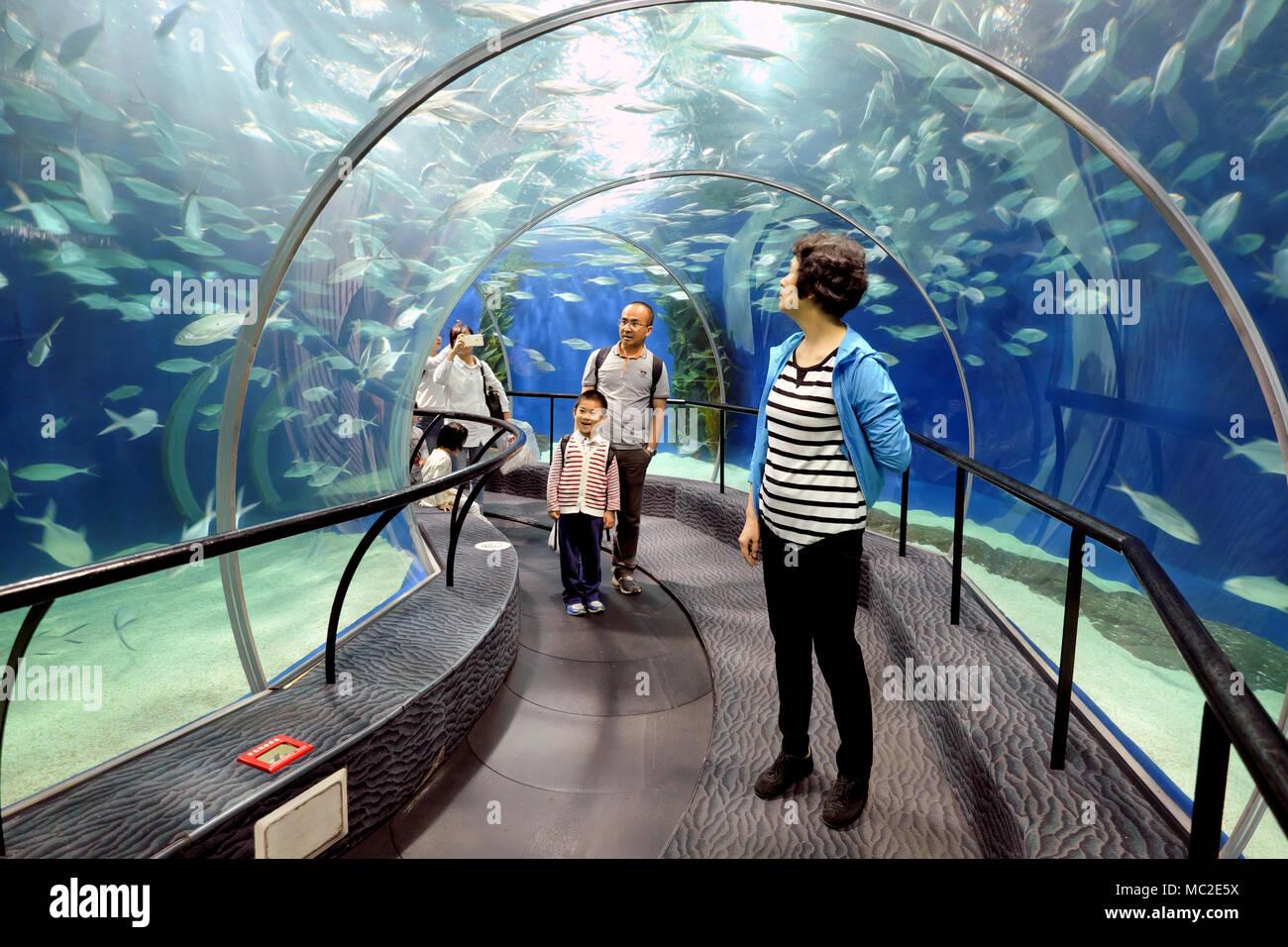Family enjoying Shanghai Ocean Aquarium - moving through a tunnel on a conveyor belt (left), Shanghai, China Stock Photo