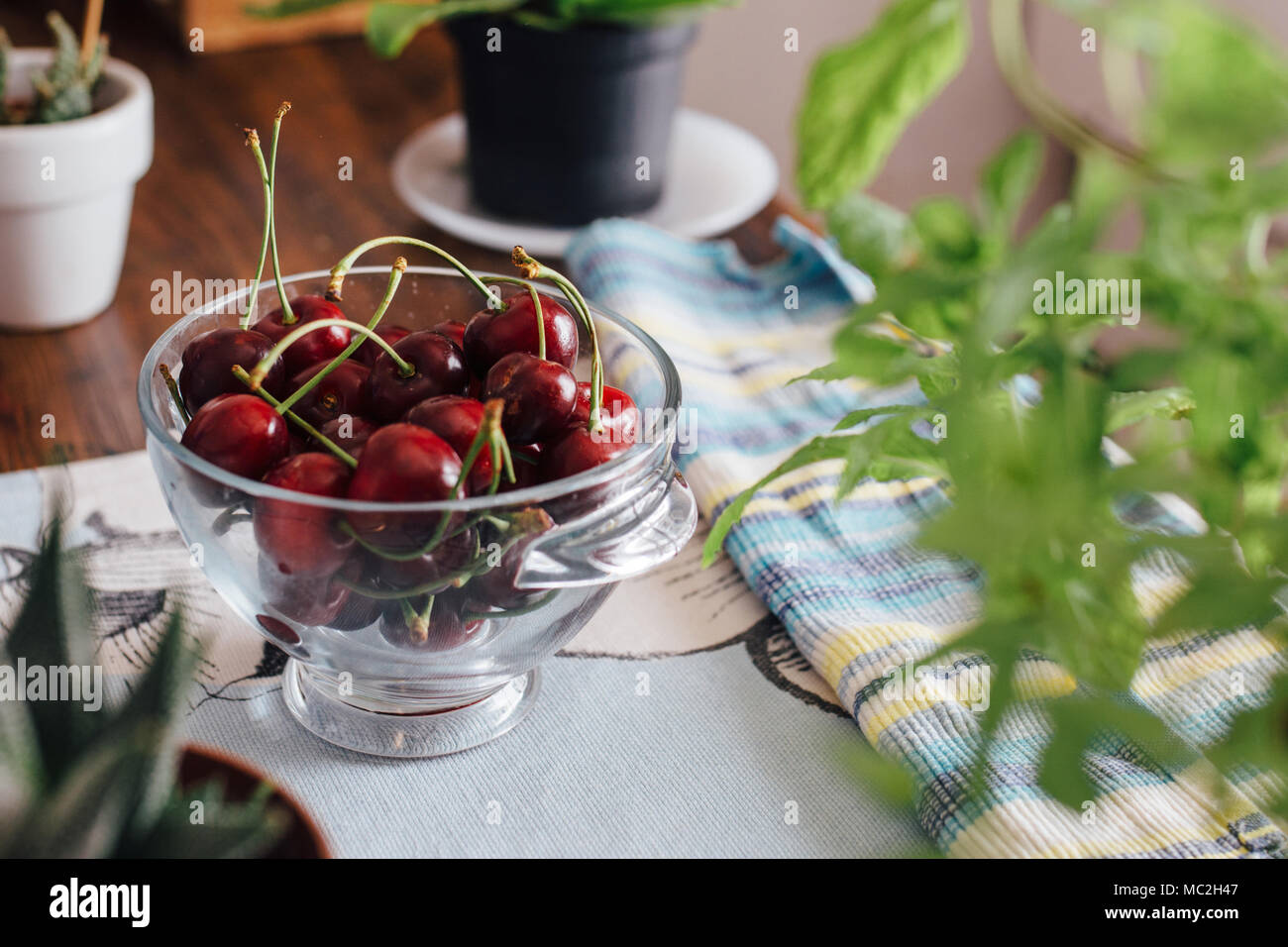 Ecological cherries in glass bowl, on the table, cultivated without pesticides, of manual picking - Stock Image