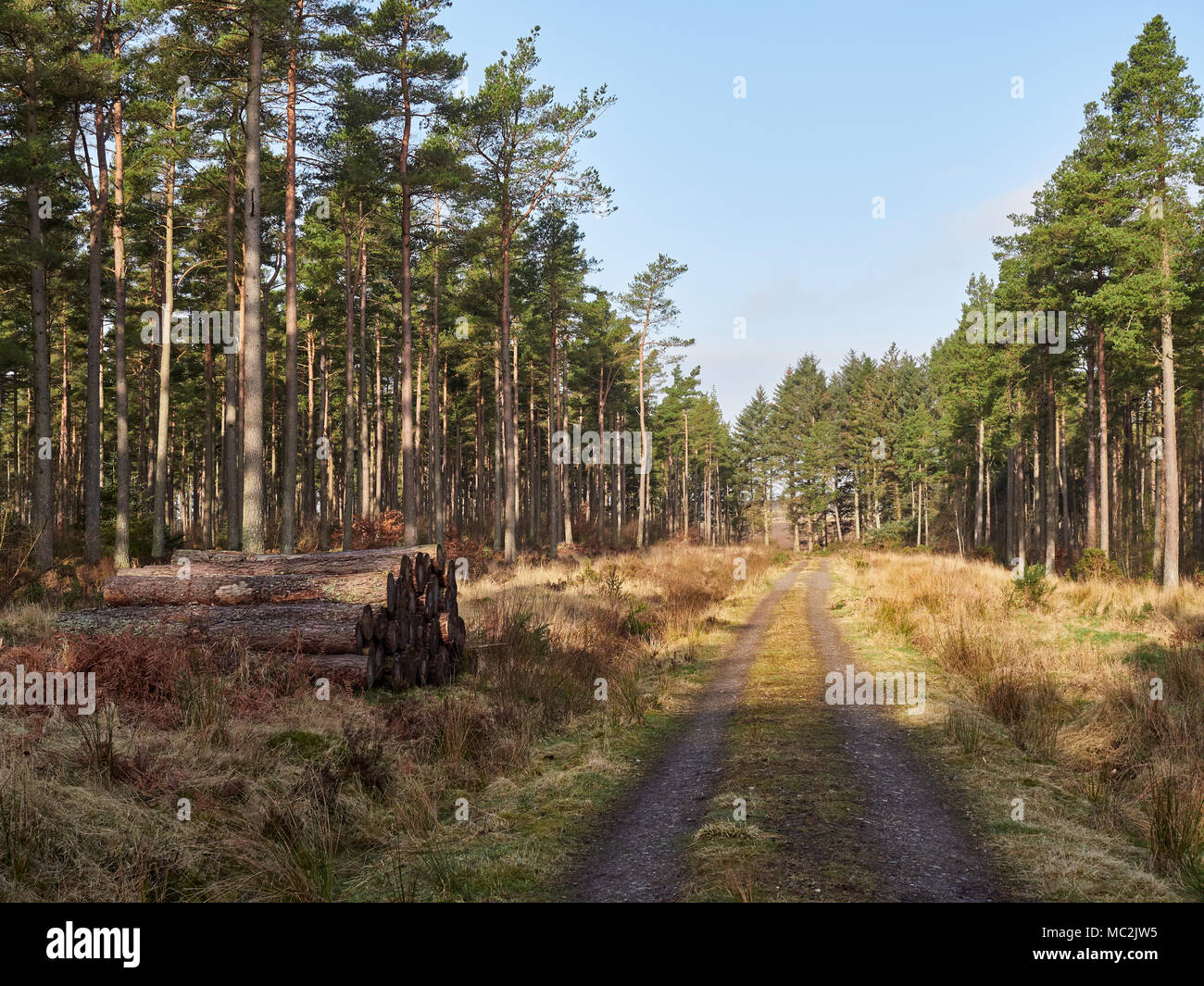 A Scottish Logging Track with stacked Logs to one side cuts straight through Montreathmont Forest near Brechin, in Angus Scotland. - Stock Image