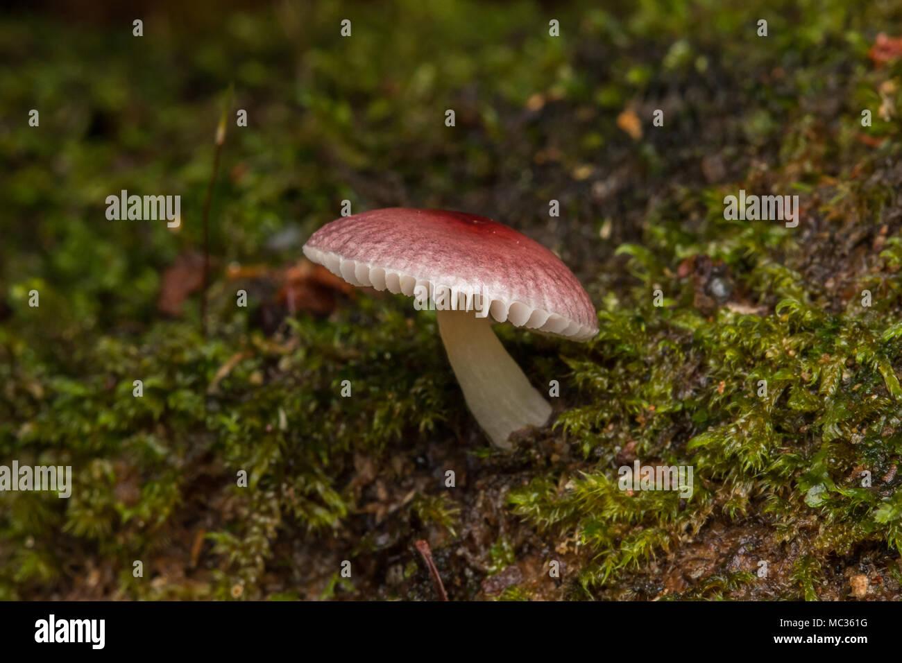 Jungle Mushroom fungus - Stock Image