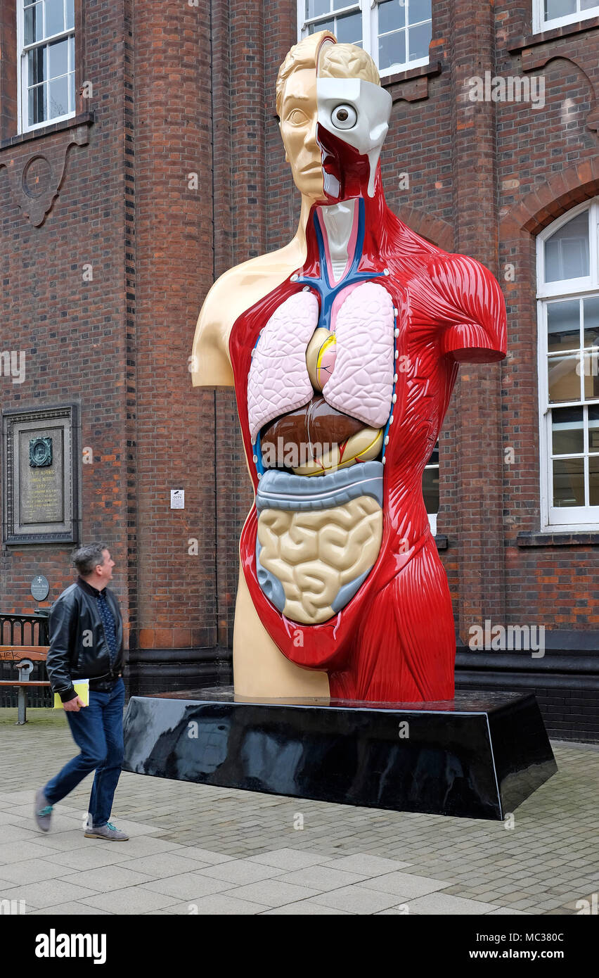 damien hirst, medical anatomical, cut away exposed figure, norwich, norfolk, england - Stock Image