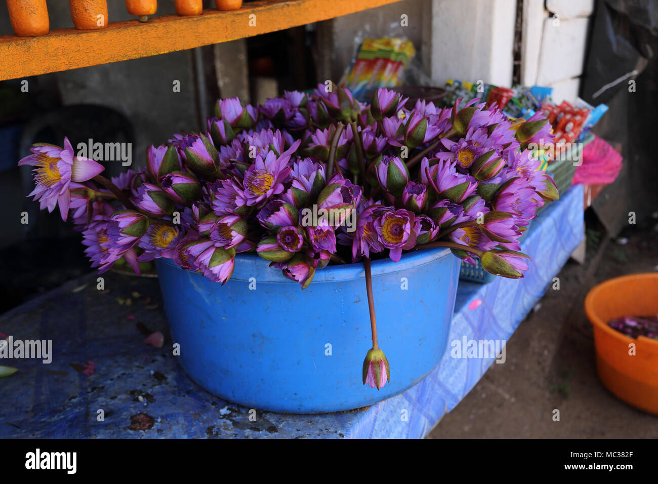 Anuradhapura North Central Province Sri Lanka Lotus Flowers For Sale as Offerings near Sri Maha Bodhi Stock Photo