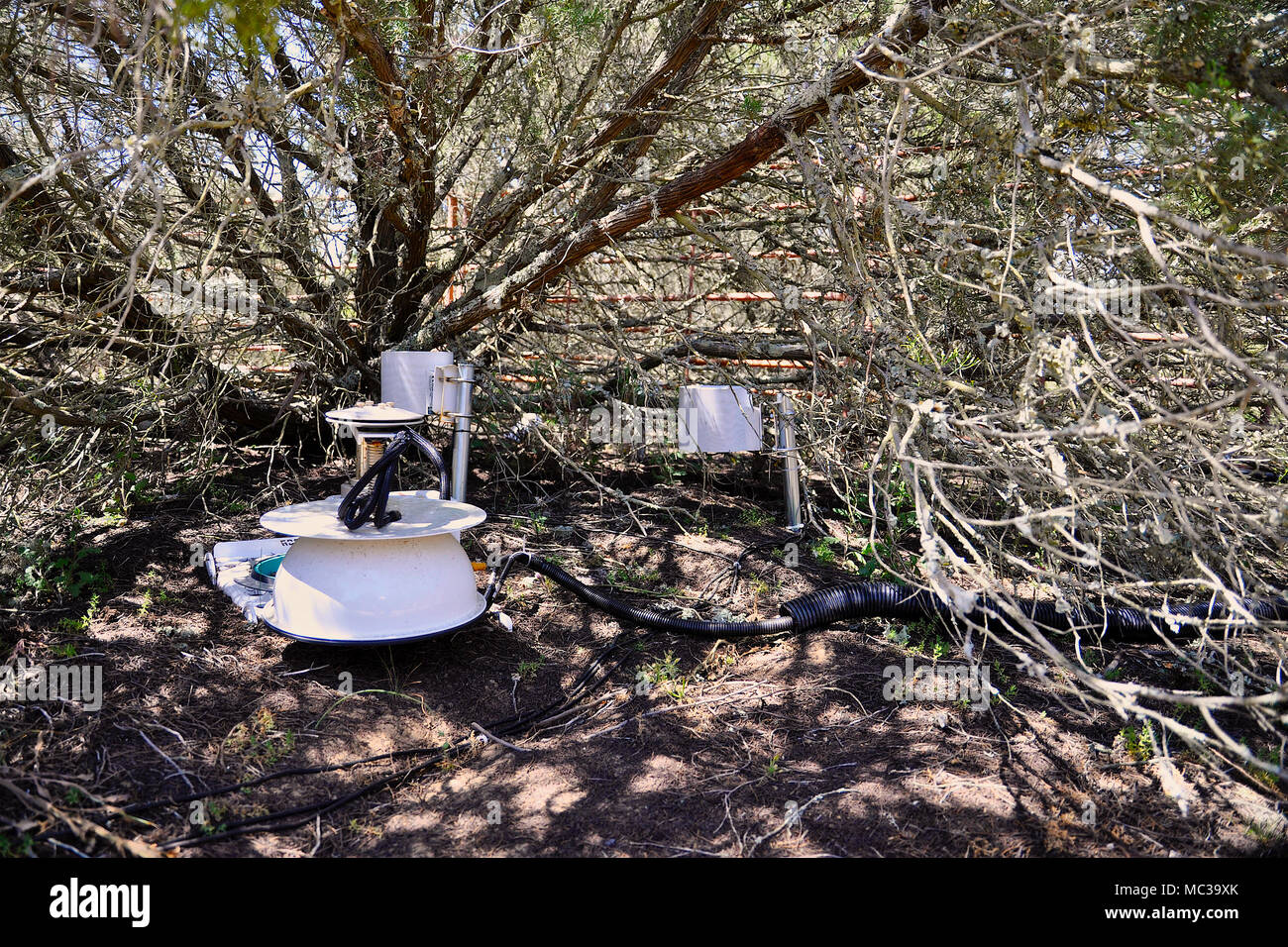 LI-COR Soil CO2 Flux System installed under a Junipers turbinata in long-term biology investigations in Doñana National Park (Huelva,Andalusia, Spain) - Stock Image