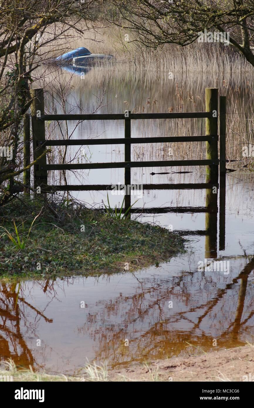 Wooden Fence by a Natural Pond in the Dune Slack of Dawlish Warren Nature Reserve After heavy Spring Rain. Devon, UK. April, 2018. - Stock Image