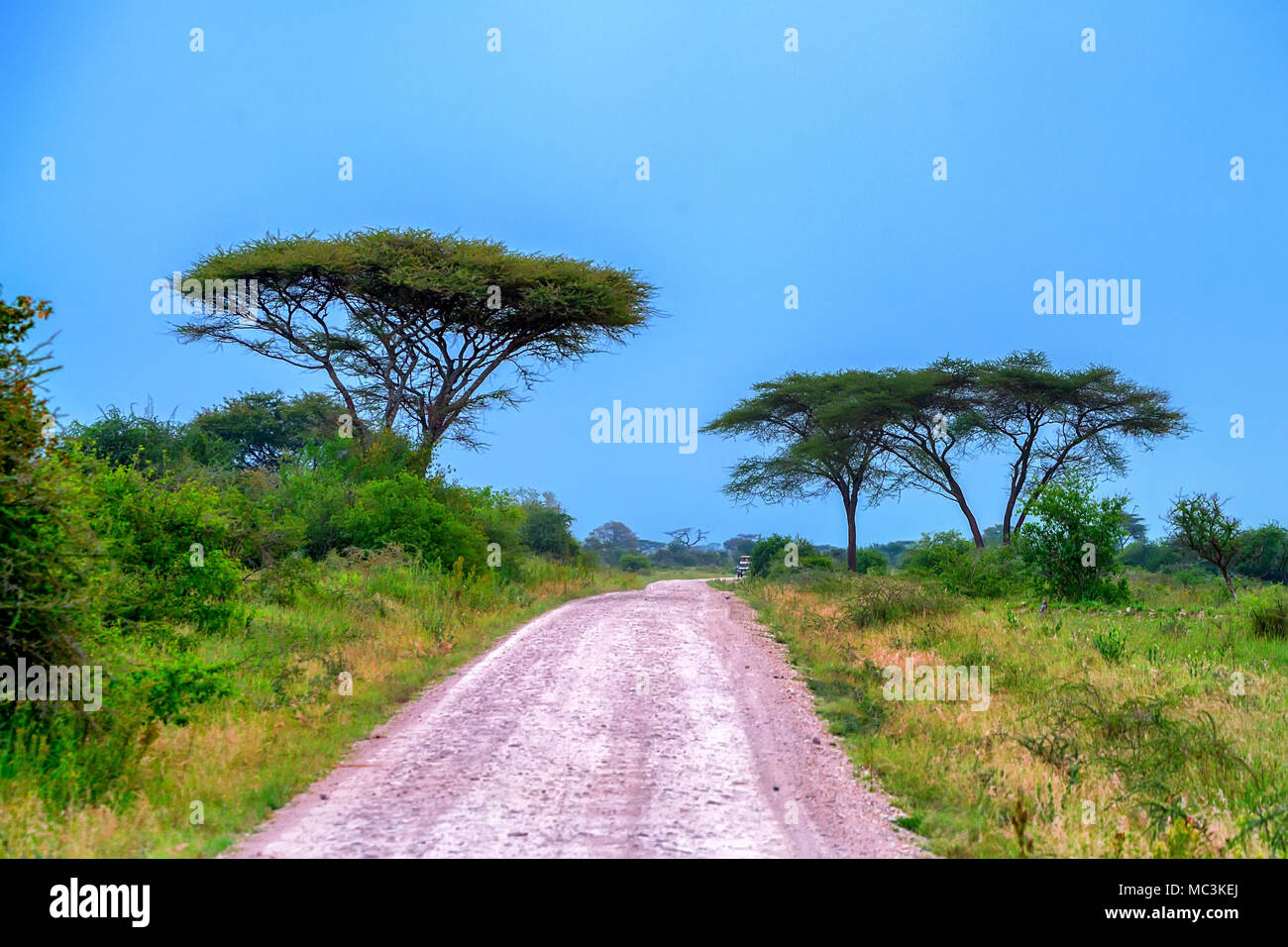 Road in African scenic forest Stock Photo