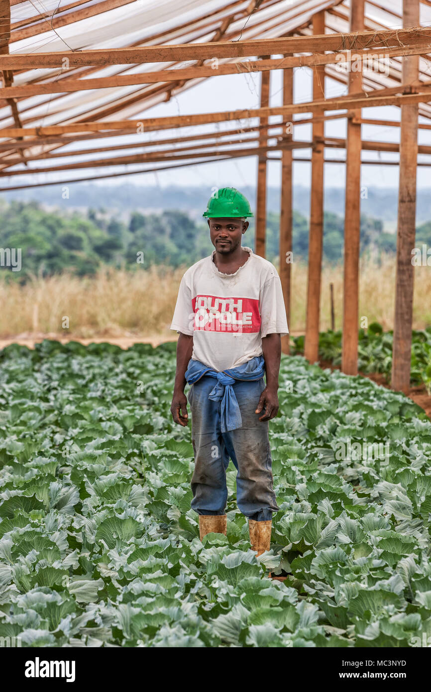 CABINDA/ANGOLA - 09JUN2010 - Portrait of a farmer in a greenhouse in the middle of a cabbage plantation. - Stock Image