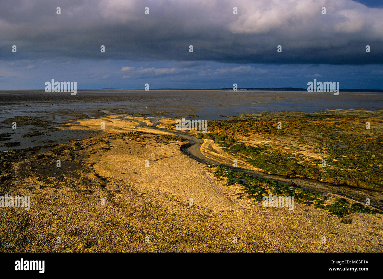 Salisbury Bank, Moyston Docks, River Dee Estuary, Clwyd, Wales, UK, GB. - Stock Image