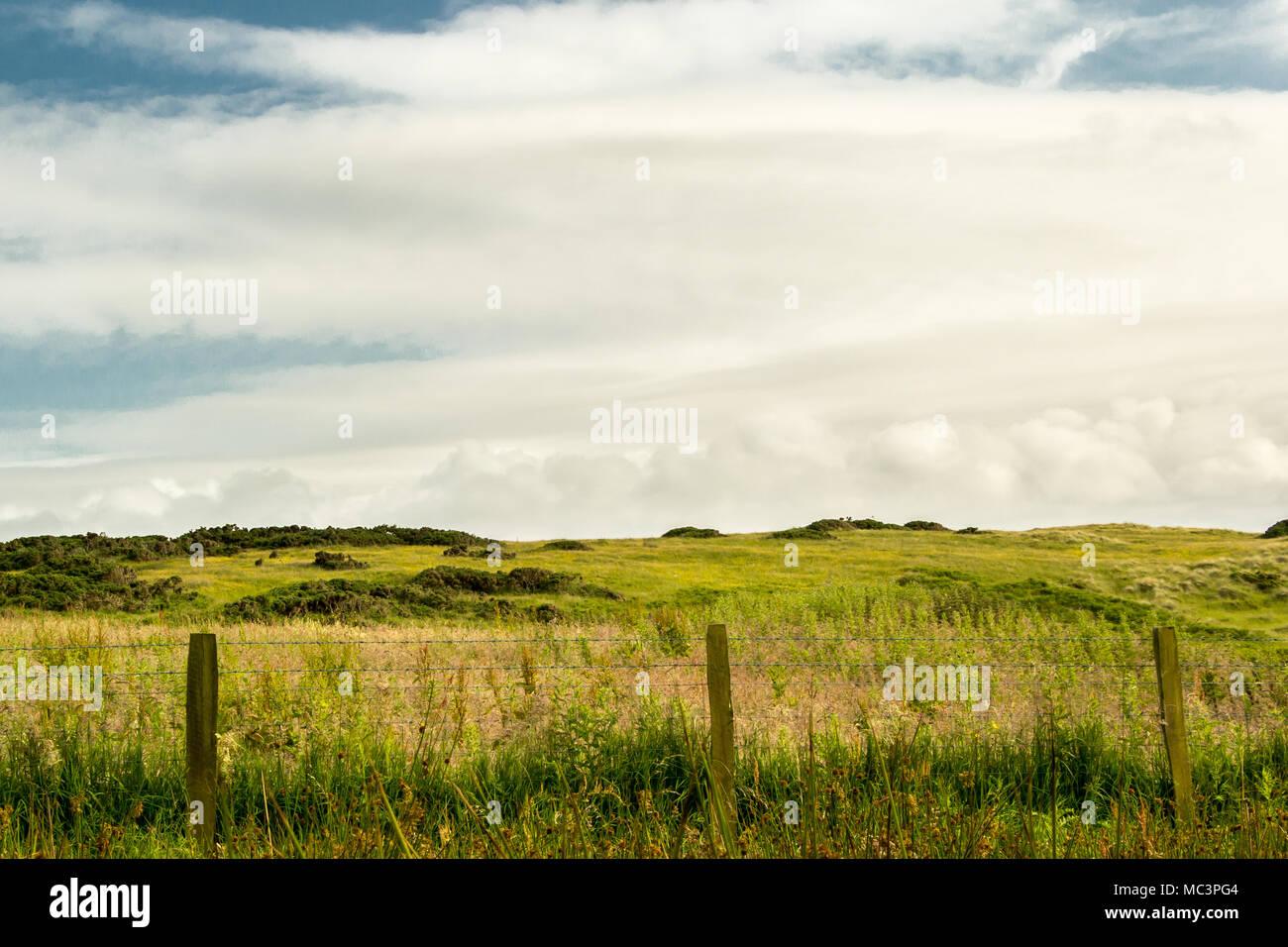 Hills of pastureland beyond an overgrown field near the Giants Causeway, Northern Ireland - Stock Image