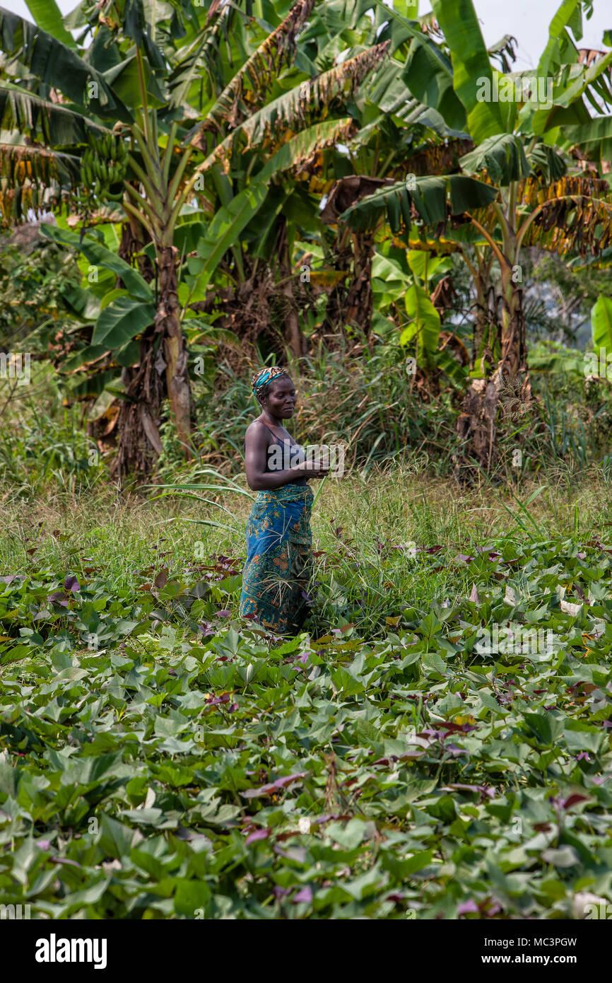 CABINDA/ANGOLA - 09 JUN 2010 - Rural female farmer working in the field. - Stock Image