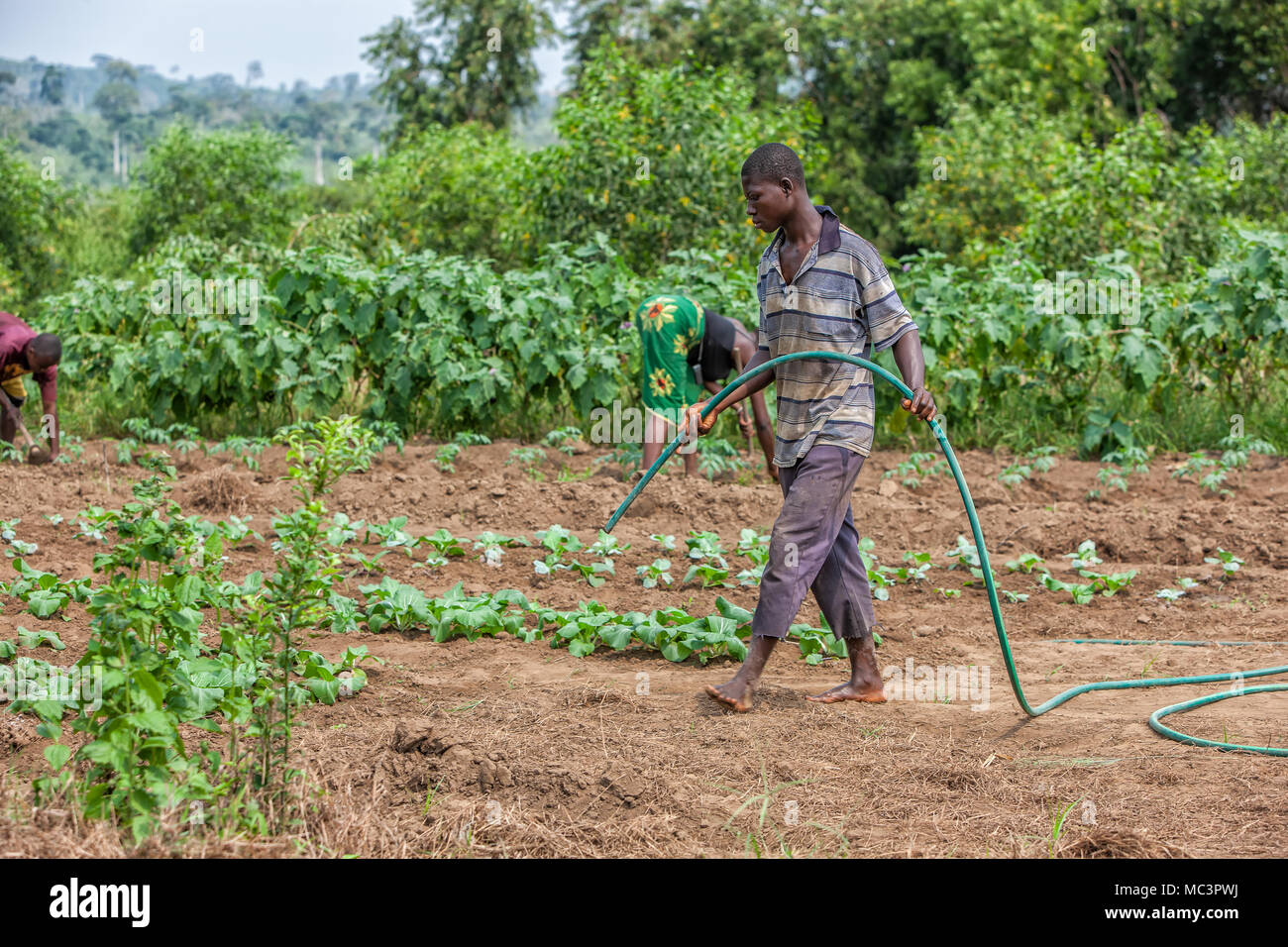 CABINDA/ANGOLA - 09 JUN 2010 - African rural farmer to watering plantation. - Stock Image